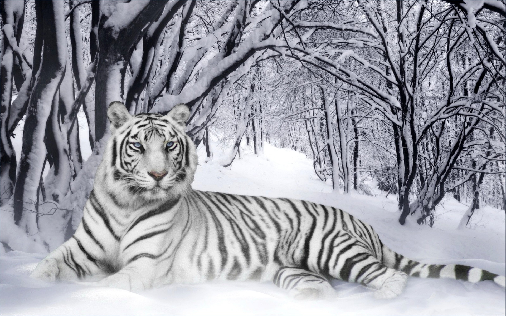 Winter animal desktop Backgrounds