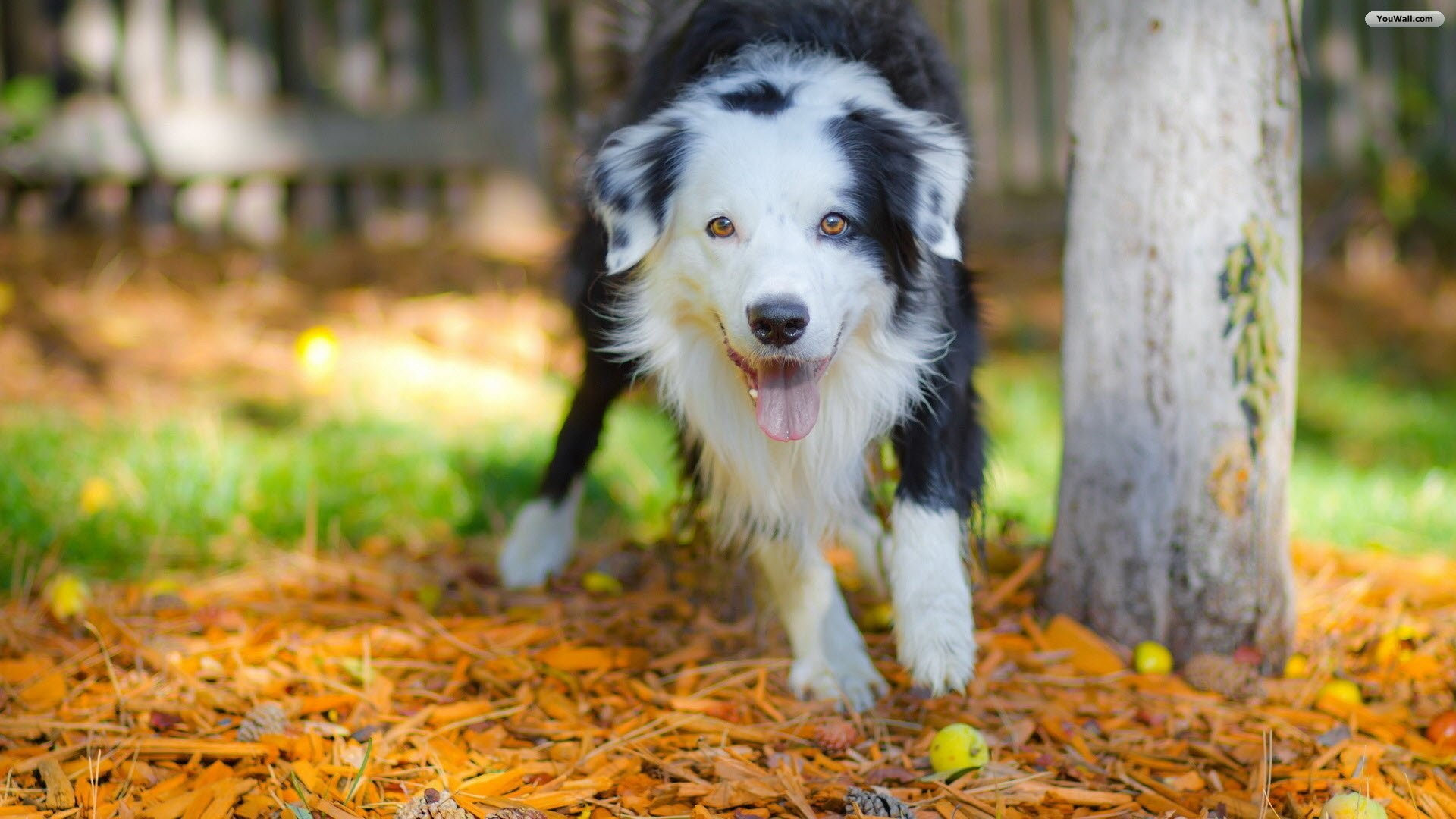 cute puppies dogs pics Description Lovely Puppy Dog Wallpaper