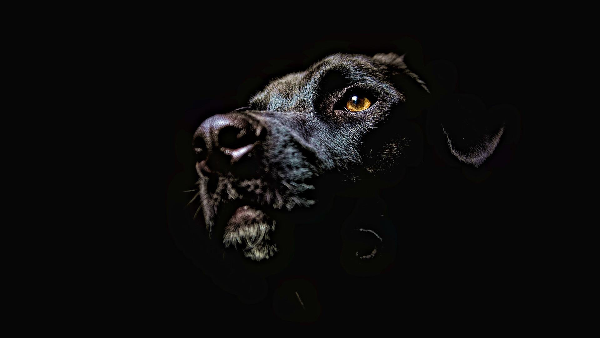 Dog Wallpaper 2