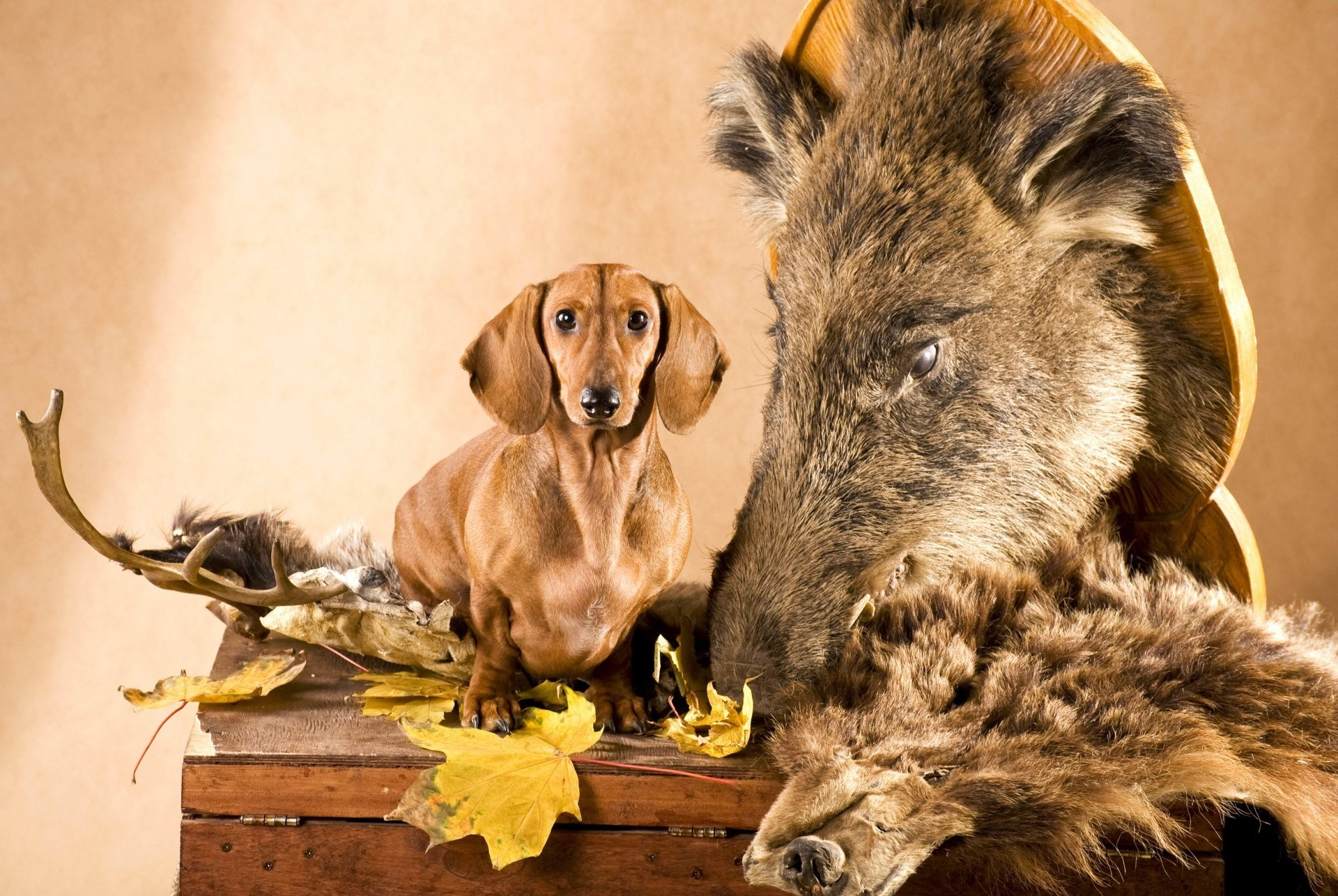 New Free Screensavers Download Free Screensavers · hunting dog screensavers  and wallpapers …