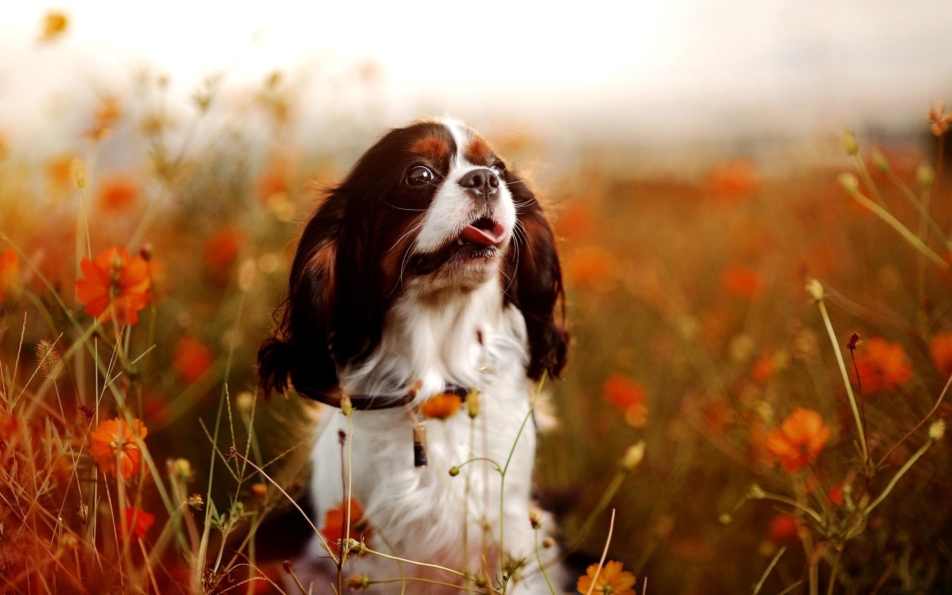 Free Dog Screensaver And Wallpaper : Free Dog Screensaver and Wallpaper Dog  Photography