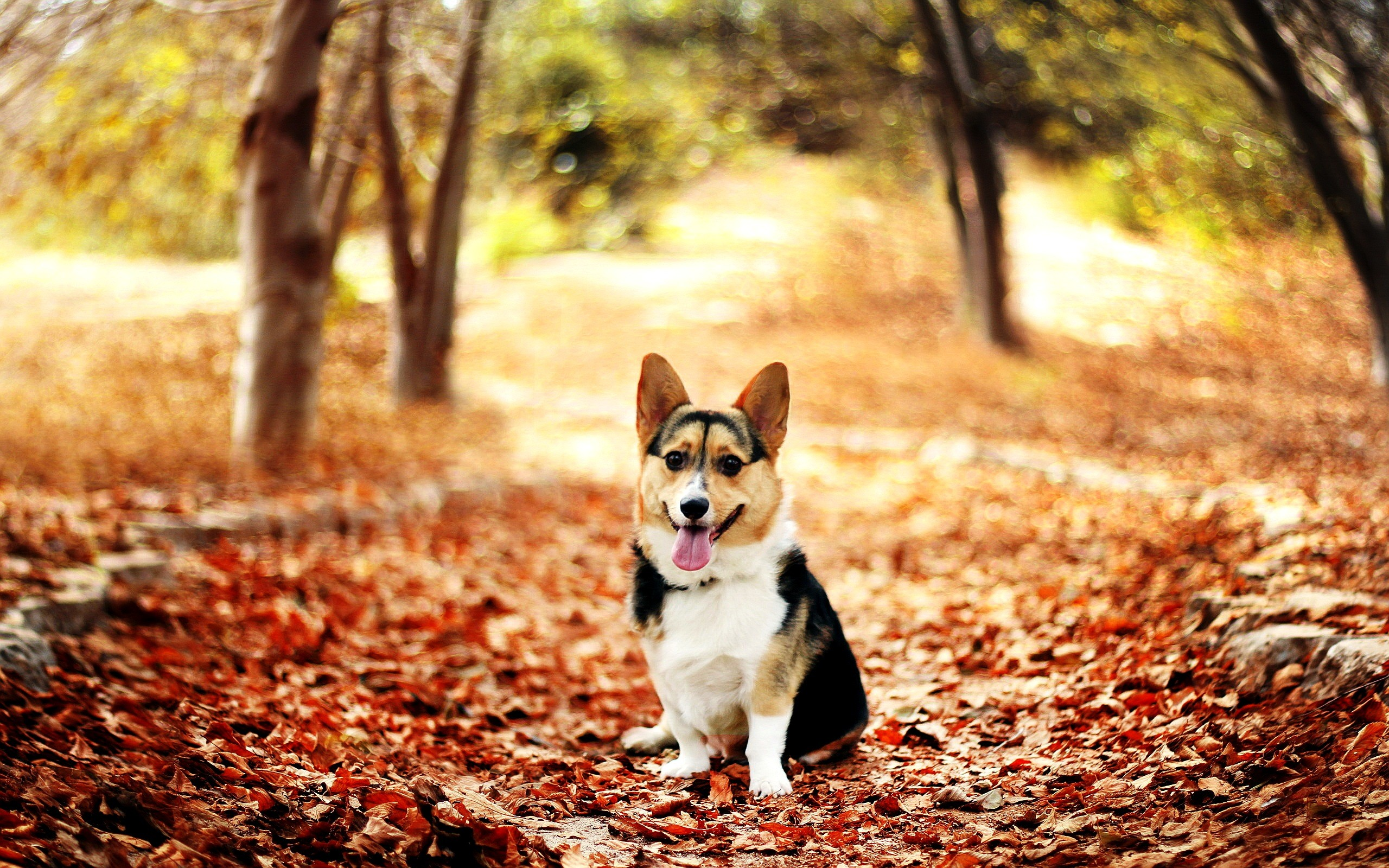 Free Dog Screensaver And Wallpaper : Free Dog Screensaver and Wallpaper  autumn