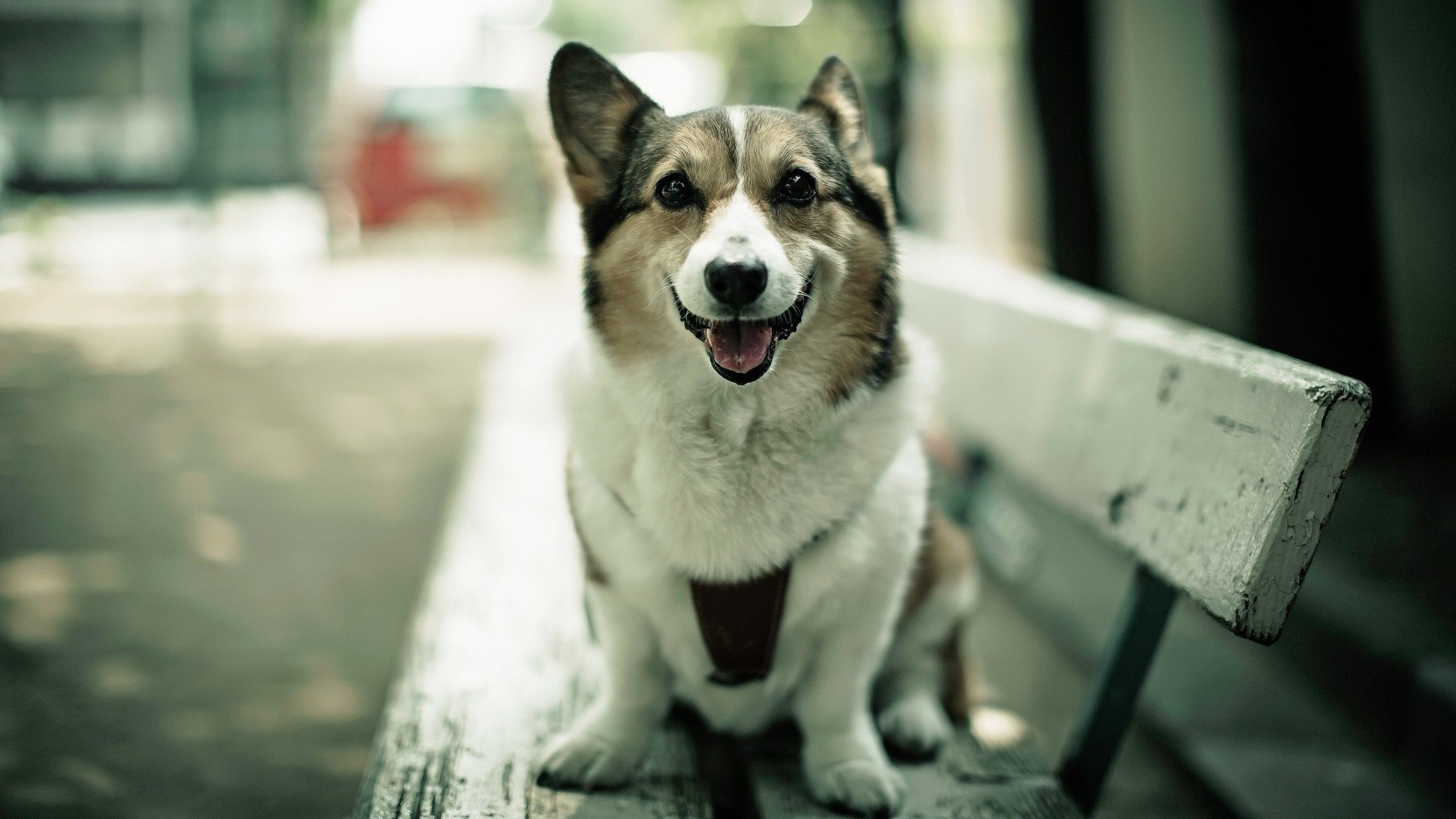 … Dog Wallpapers Collection (4)