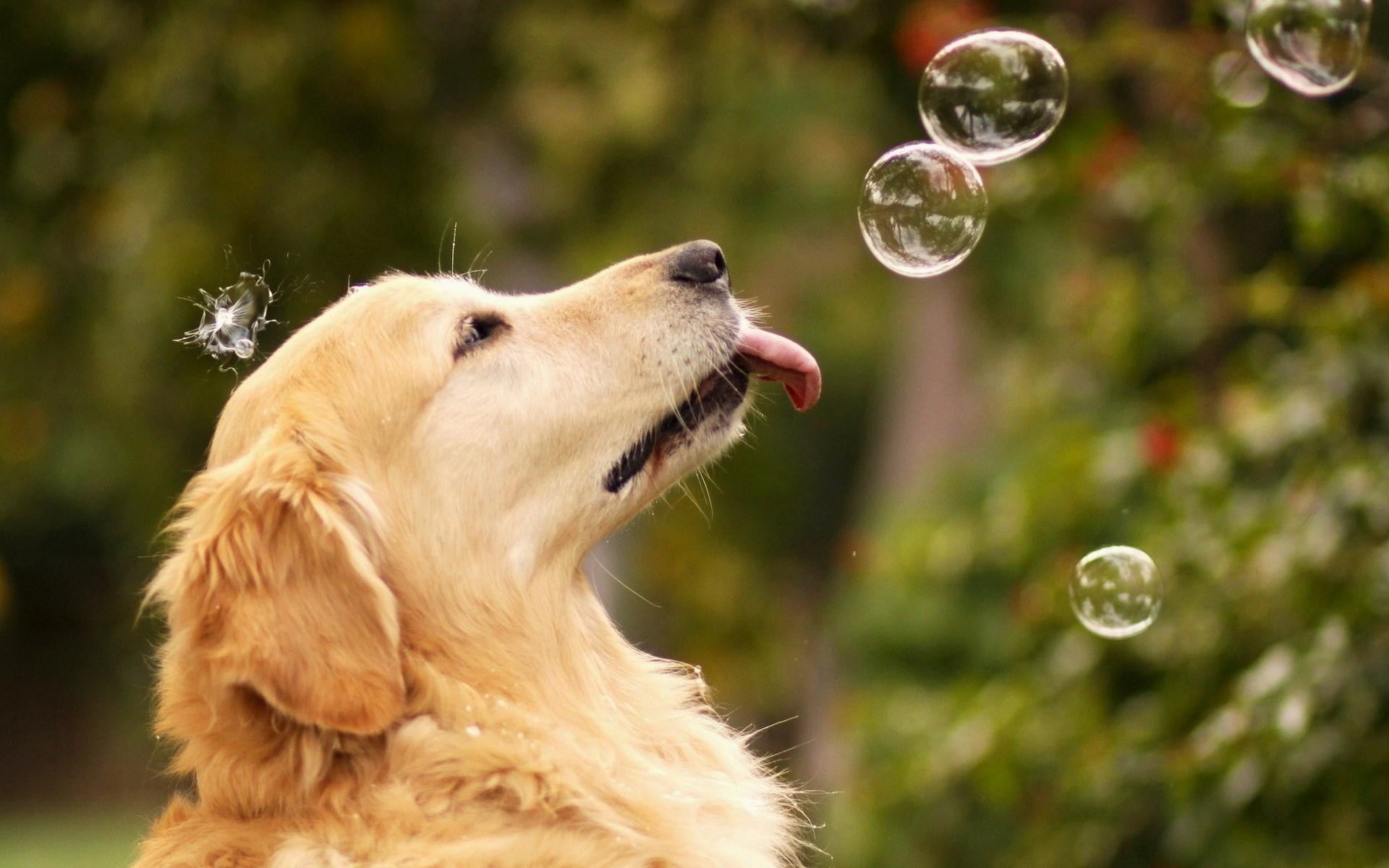 Dog-images-HD-background-wallpaper