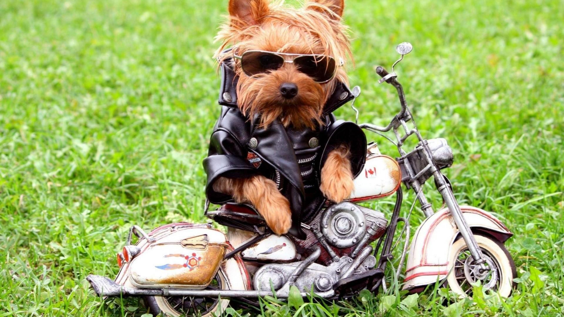 Dog Funny Free HD Wallpapers   Download Free Desktop Wallpaper Images .