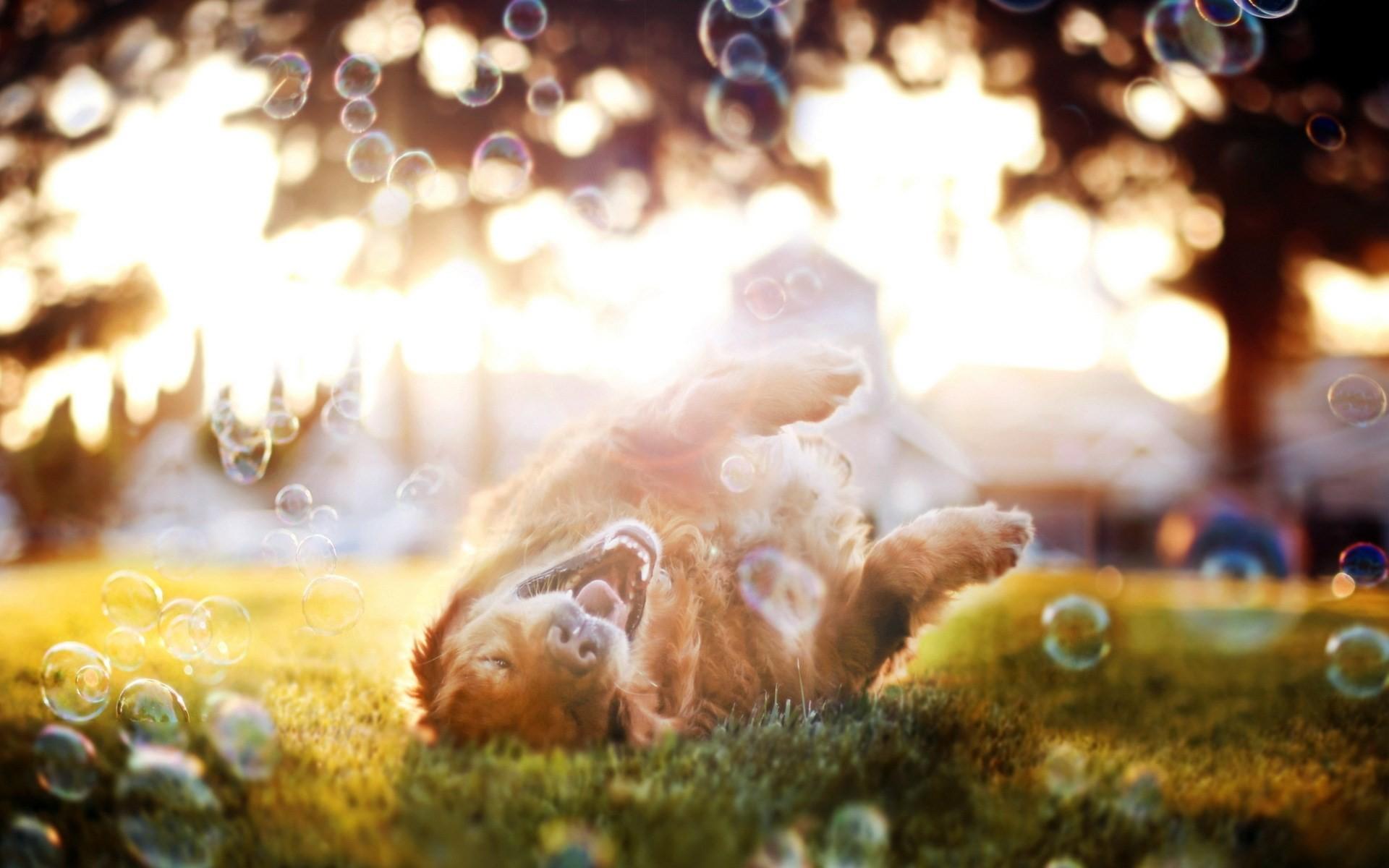 dog wallpapers bubbles. Â«Â«
