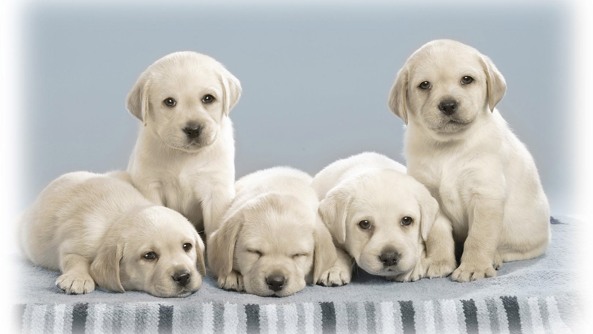 dog wallpapers frisbee. Â«Â«