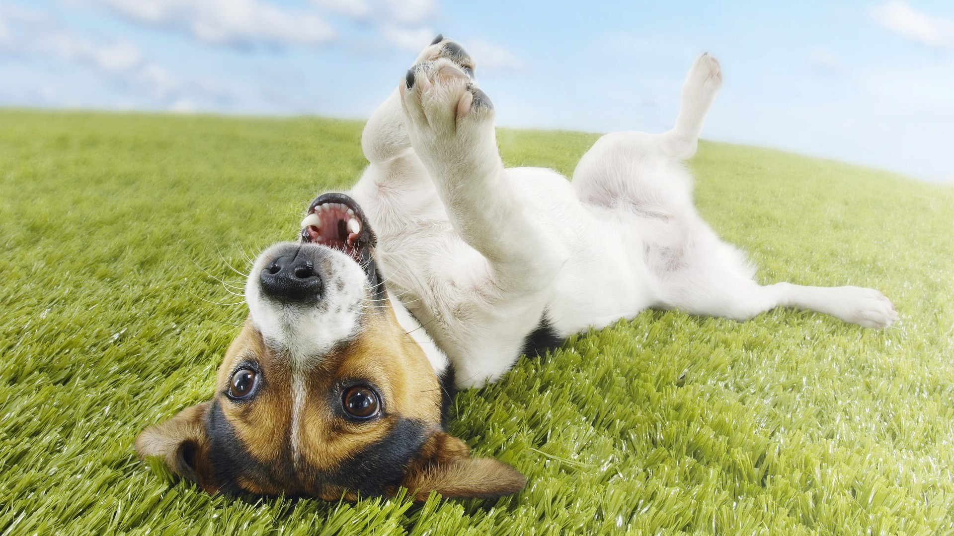 dog wallpapers fun. Â«Â«