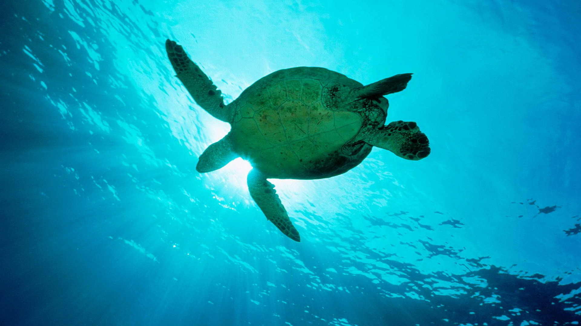 Sea Turtles Wallpaper Sea, Turtles