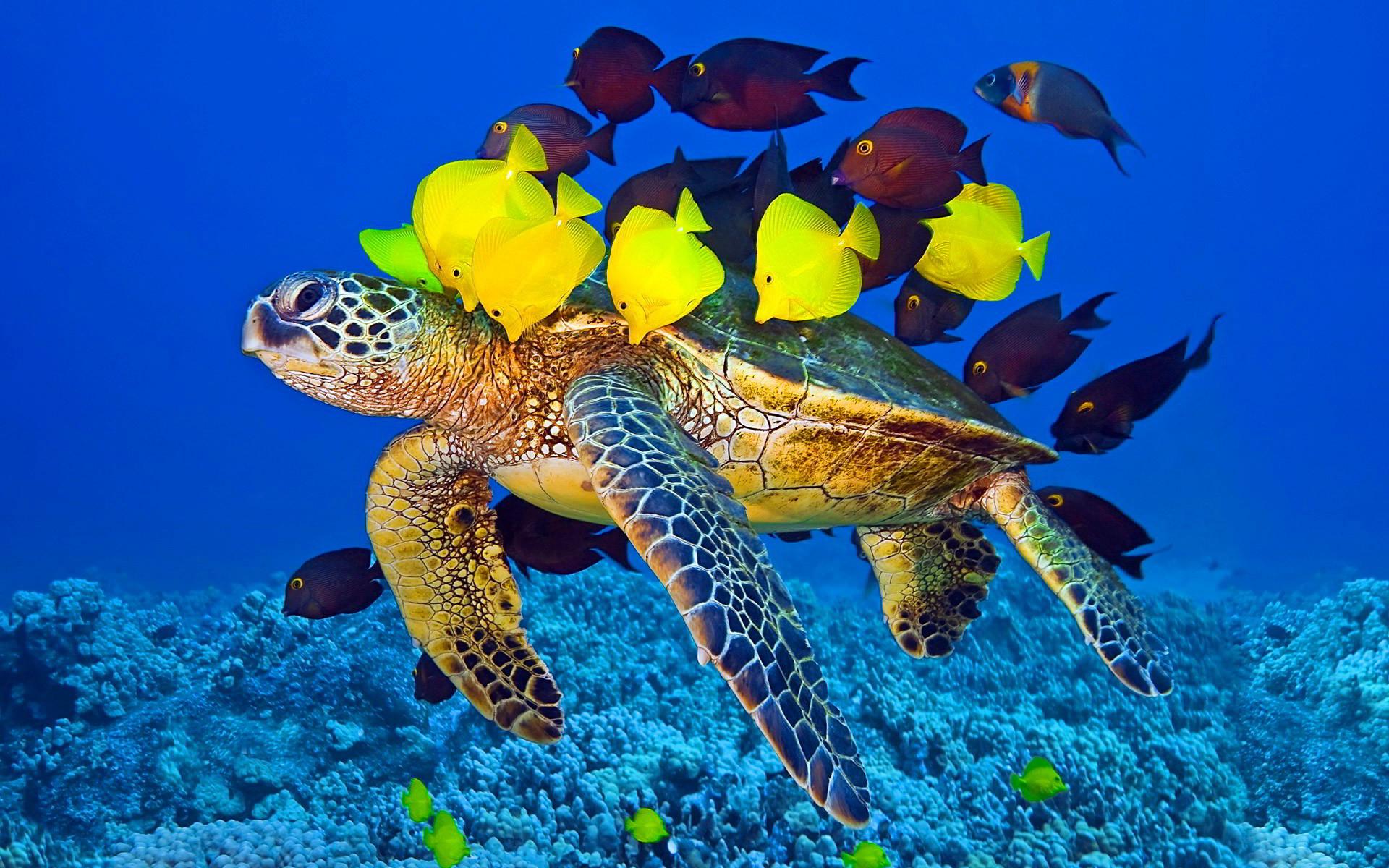 Ultra HD hawksbill turtle | Ultra HD Wallpapers | Pinterest | Turtle and Sea  turtles