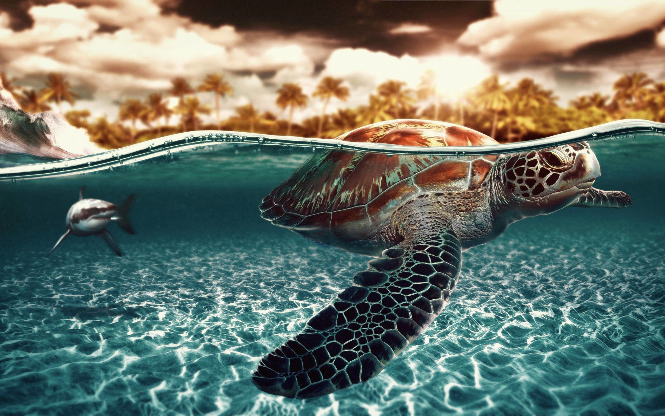 Wallpapers For > Nemo Sea Turtle Wallpaper