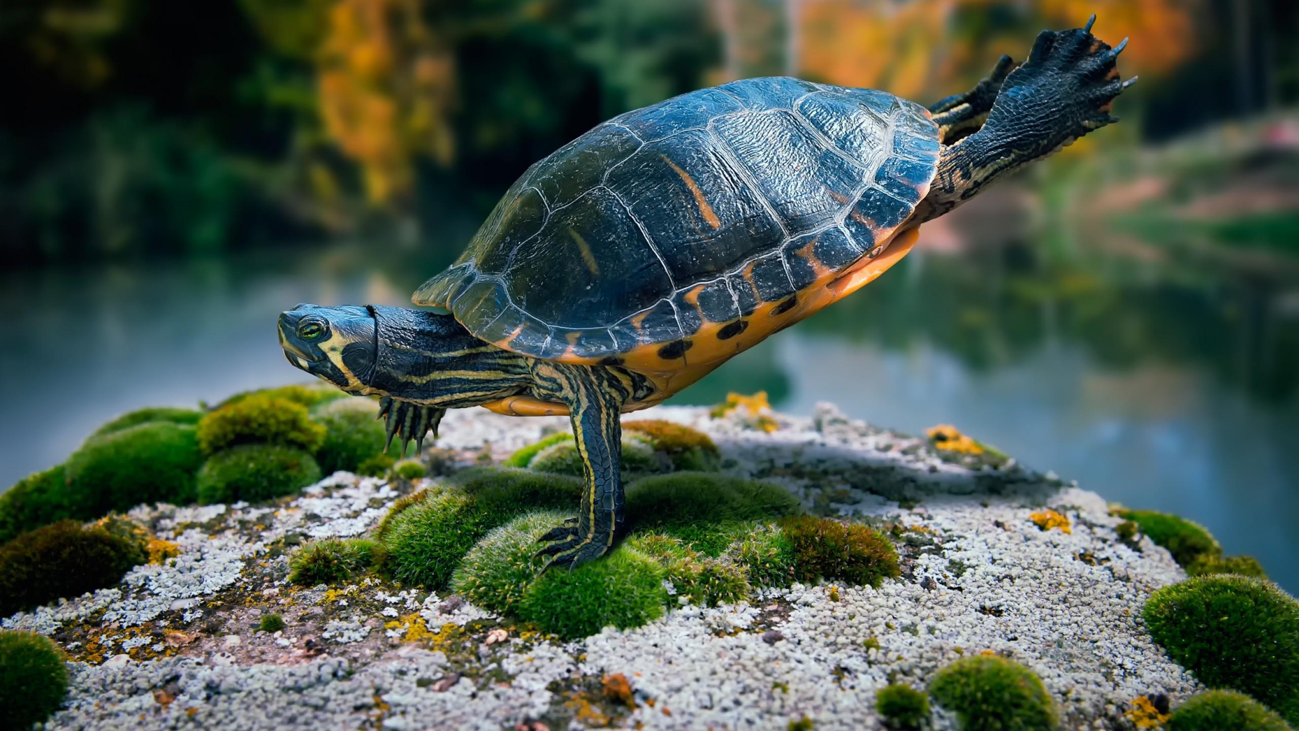 Preview wallpaper turtle, swimming, sea 2560×1440