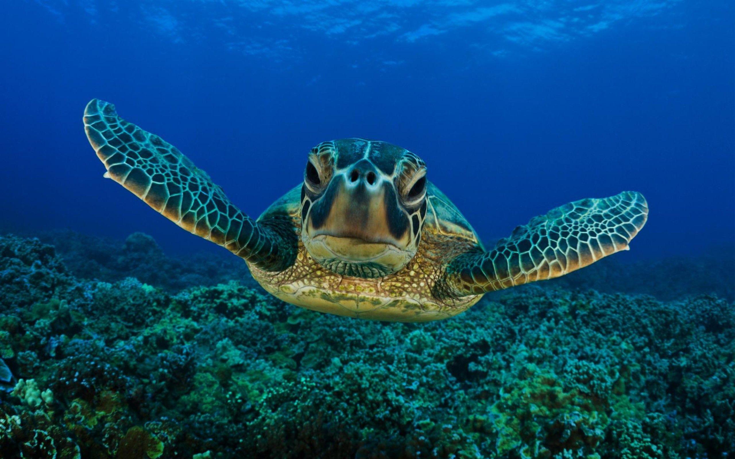 Sea Turtle (id: 158715) – BUZZERG