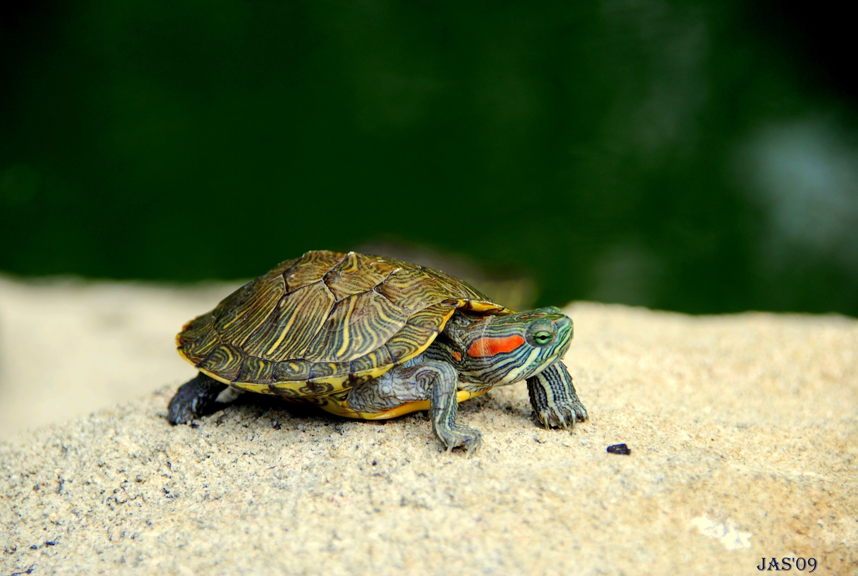 194 Turtle HD Wallpapers