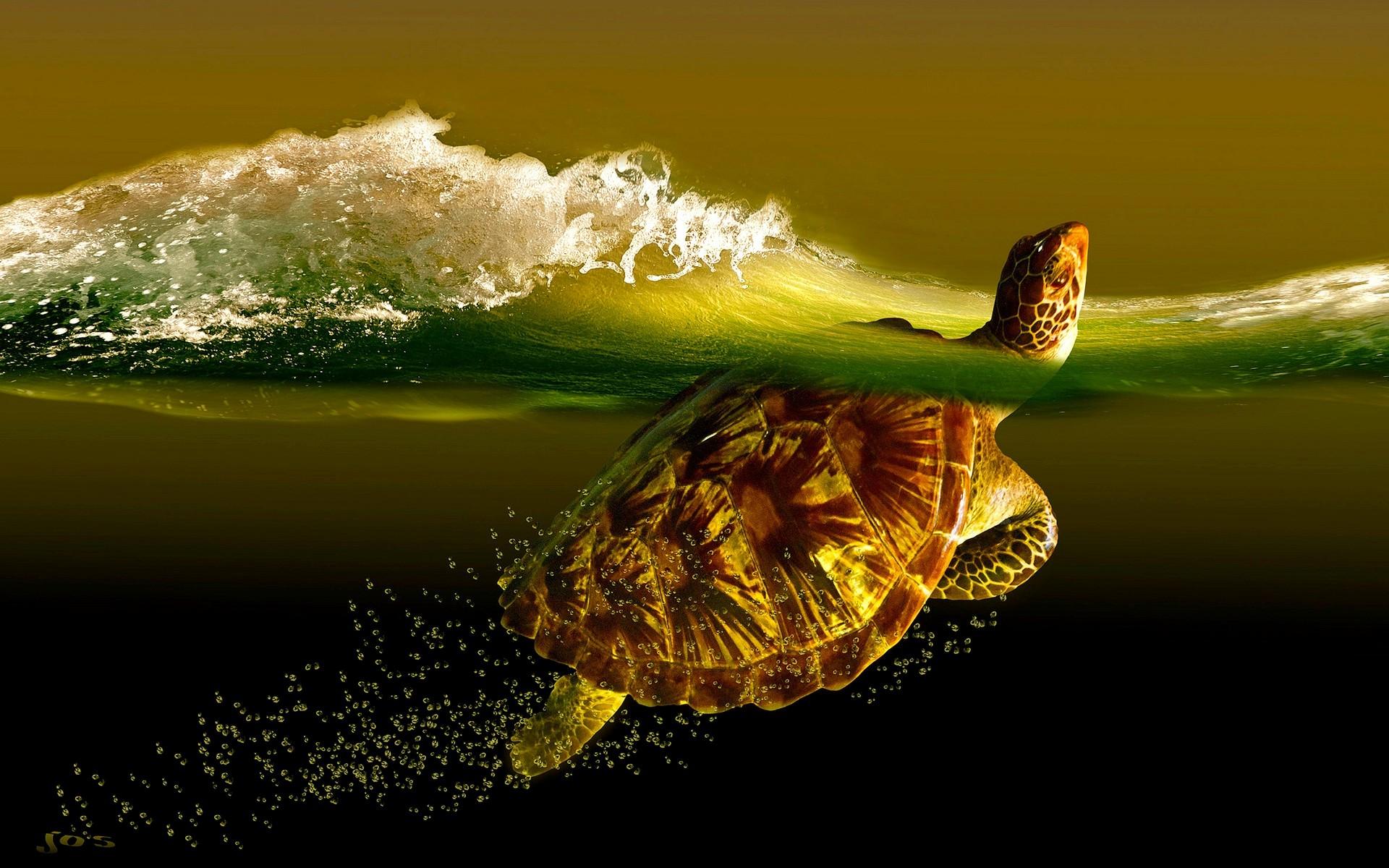 Turtle Wide Desktop Background