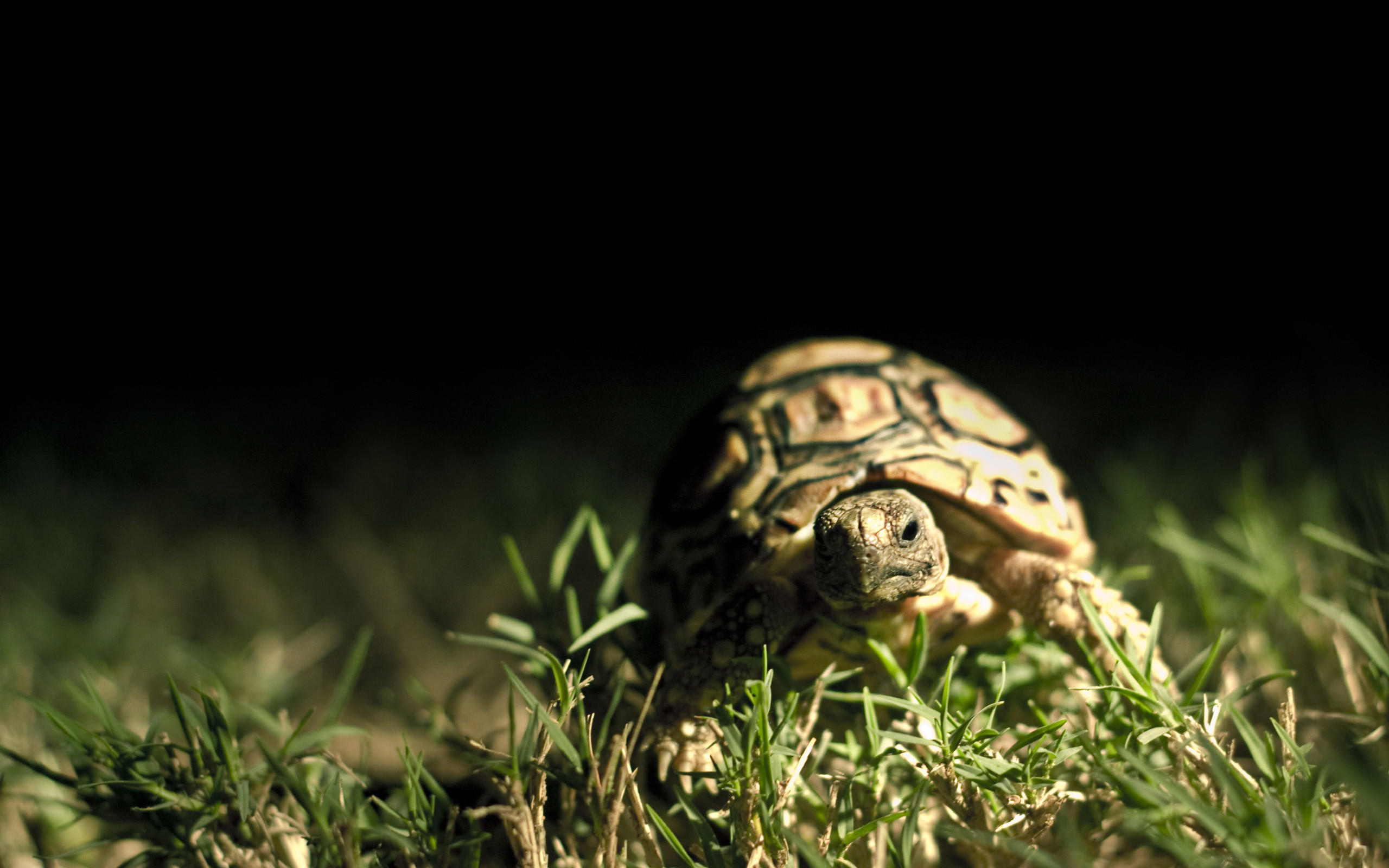 100% Quality HD Turtle Wallpapers | Background ID:780762278