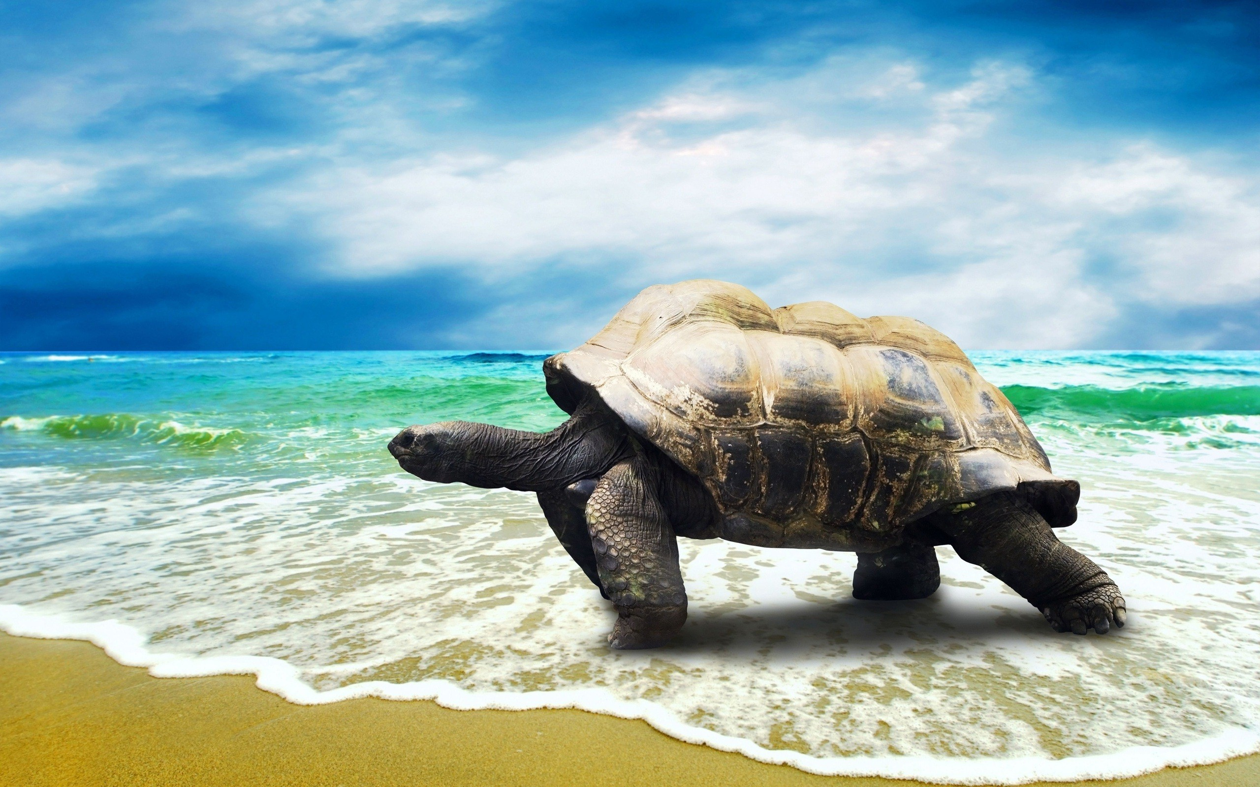 Big-Turtle-Walking-on-Beach-HD-Wallpapers