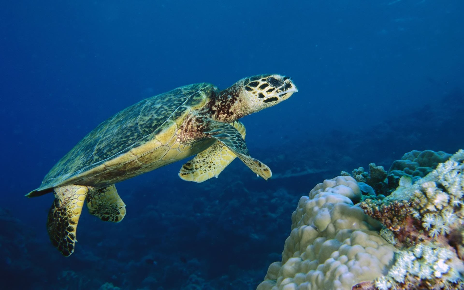 Sea Turtle 381470