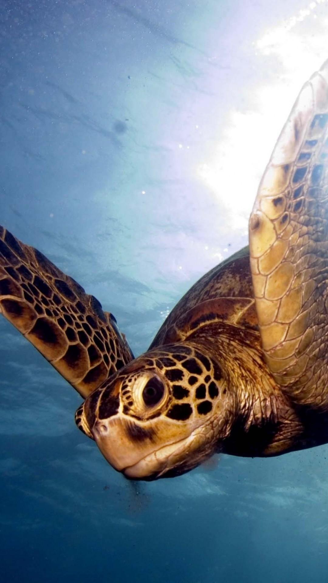 Wallpaper barrier reef, sea, swim, turtle