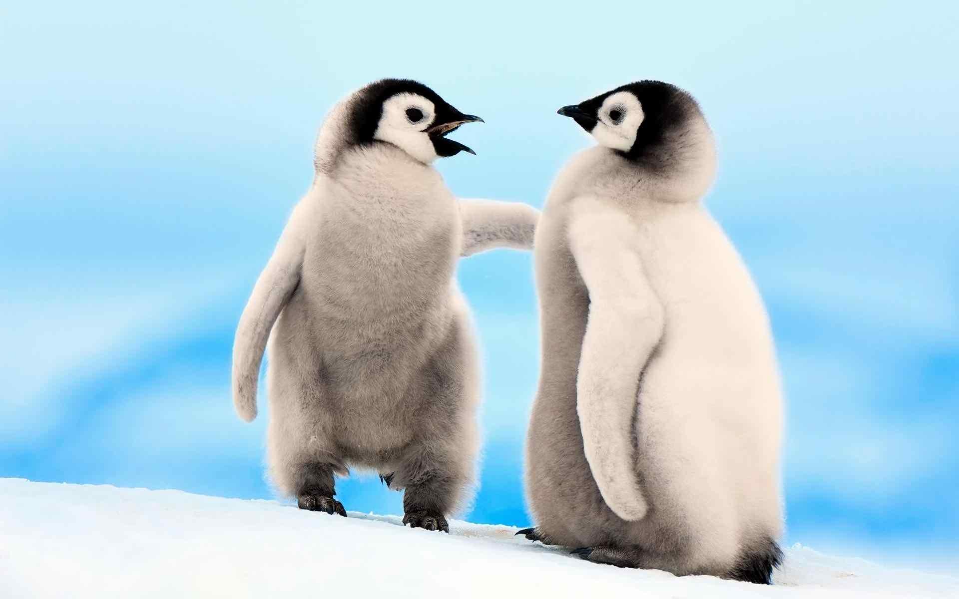 little penguins widescreen wallpaper