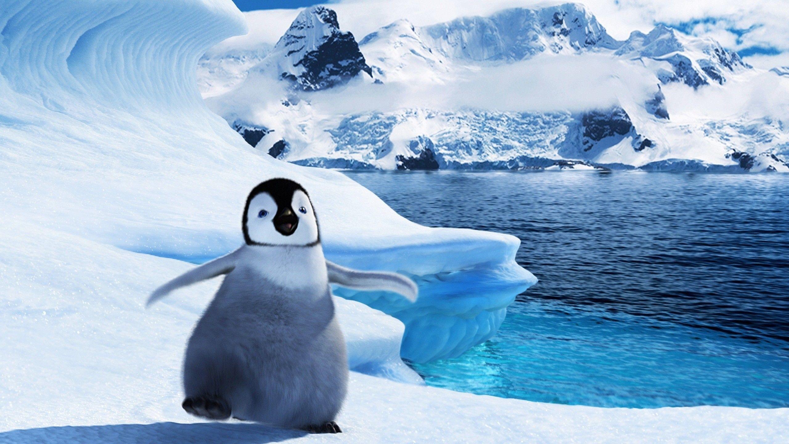 Baby Penguin Wallpaper