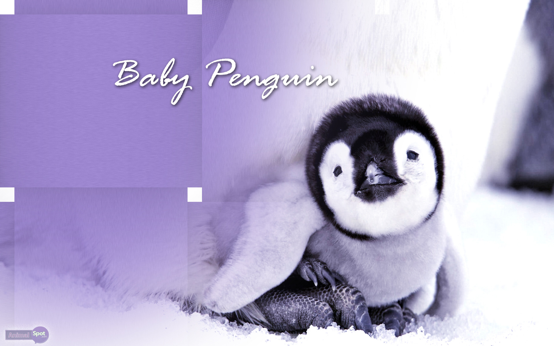 Best Penguin Wallpapers and Backgrounds