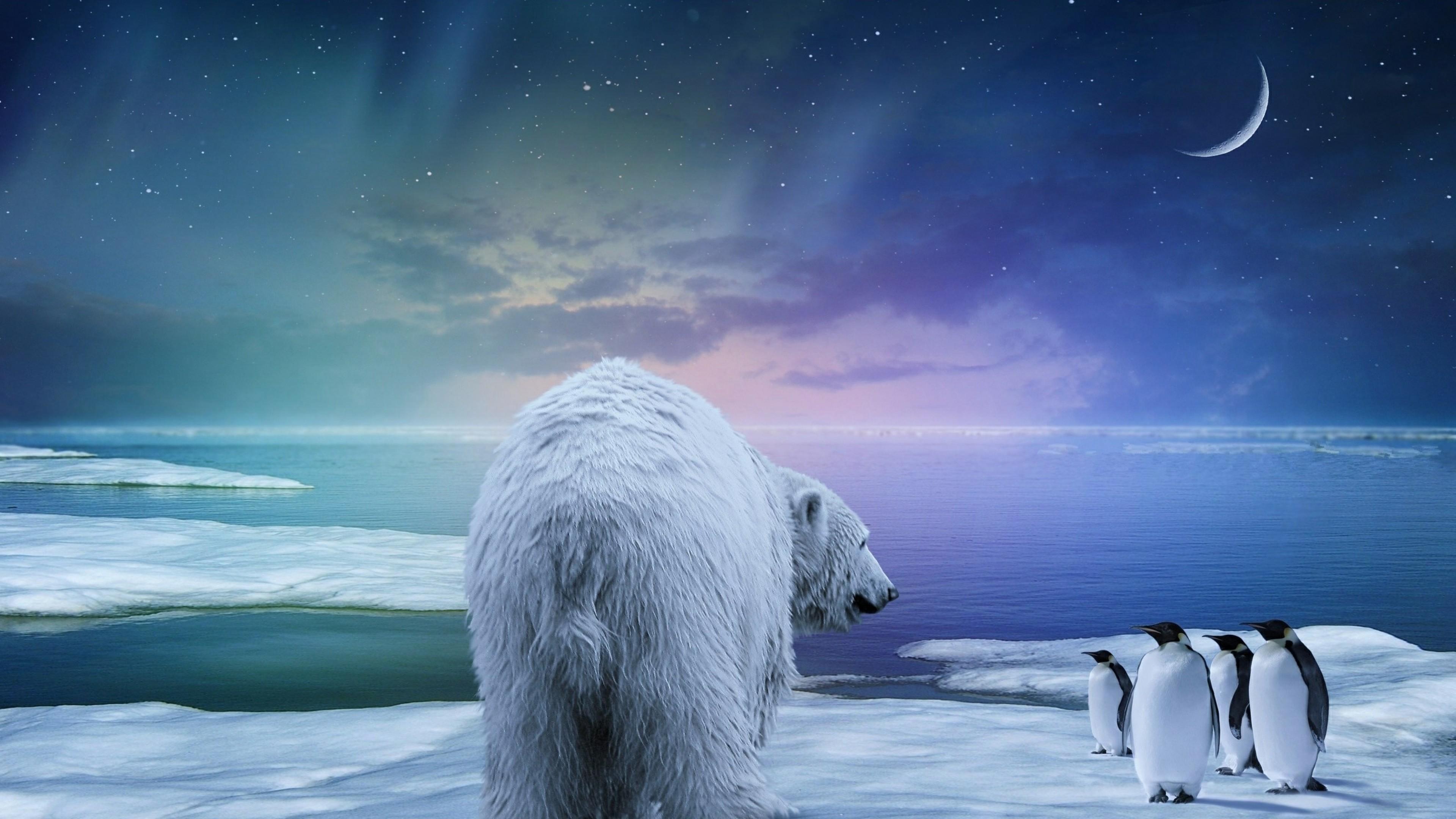 Wallpaper polar bear, penguin, northern lights