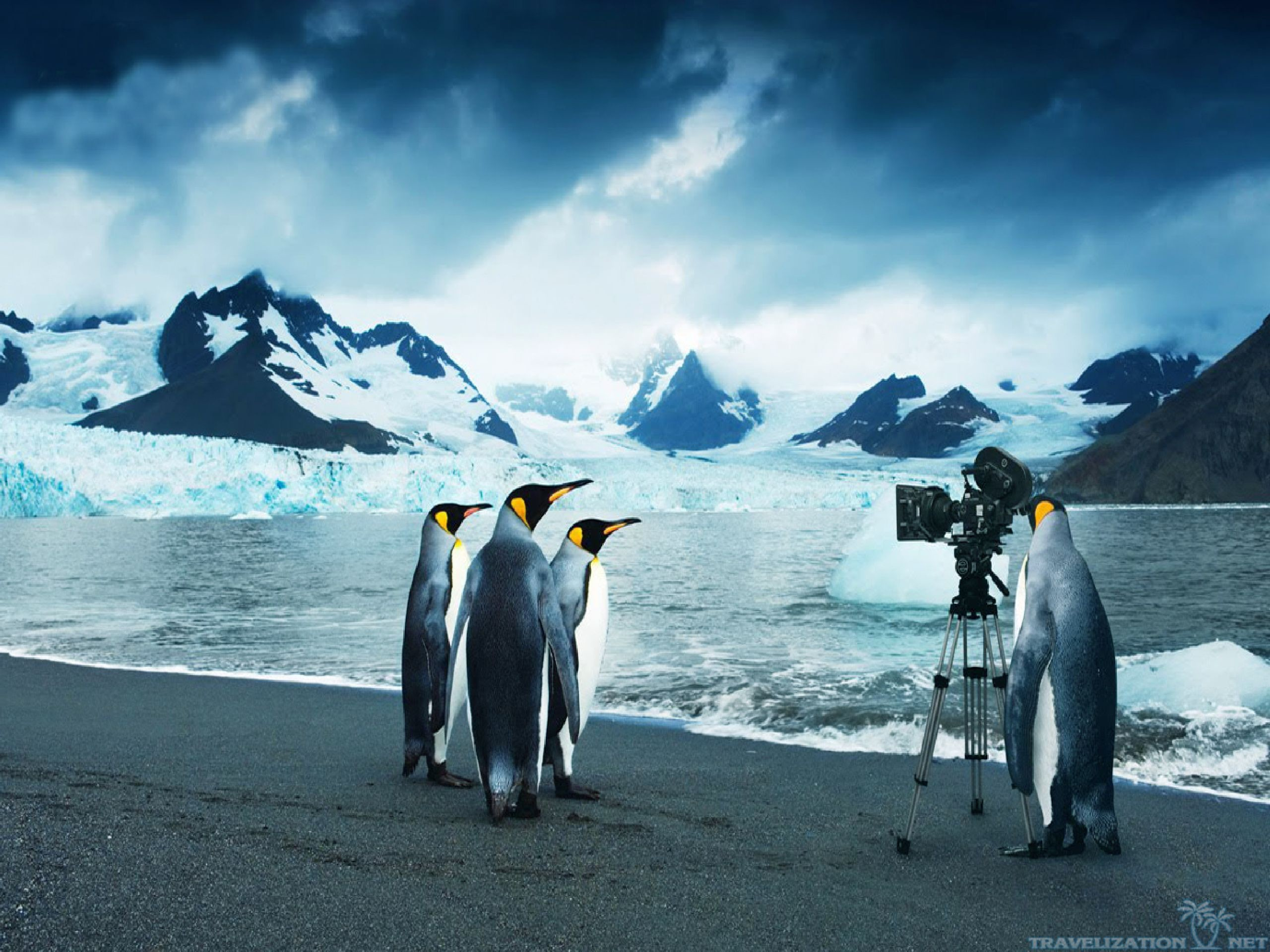 Penguin HD Wallpapers Backgrounds Wallpaper | HD Wallpapers | Pinterest |  Wallpaper, Wallpaper backgrounds and Painting pictures