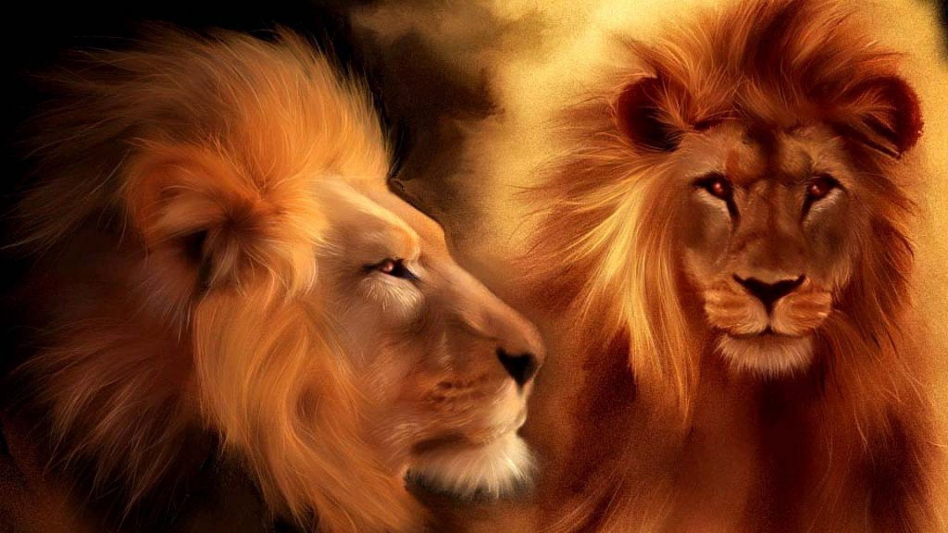0 Lion HD Wallpapers and Backgrounds Lion Hd Wallpapers Collection (4)