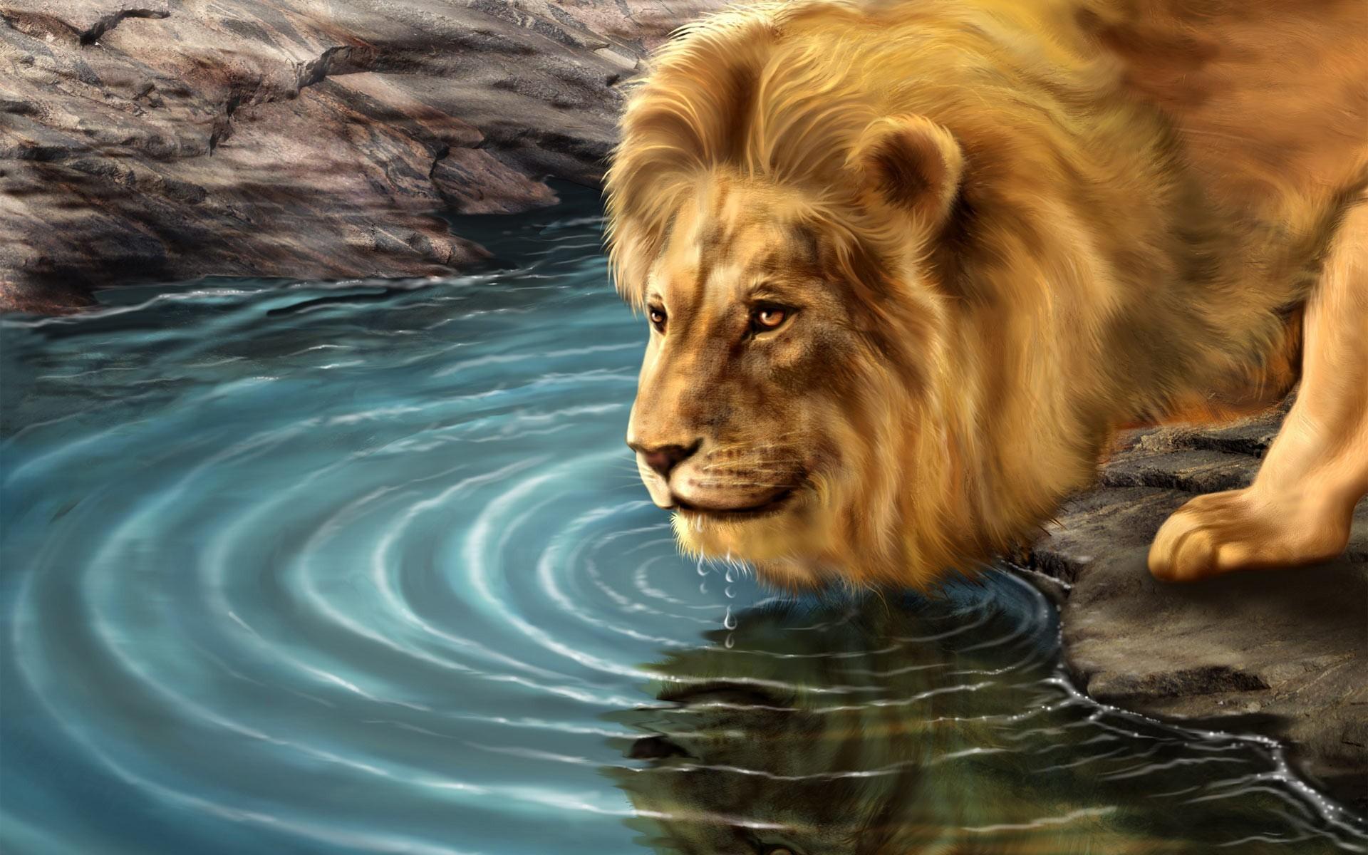Lion lion water drinking hd wallpapers.jpg – World HD Wallpapers