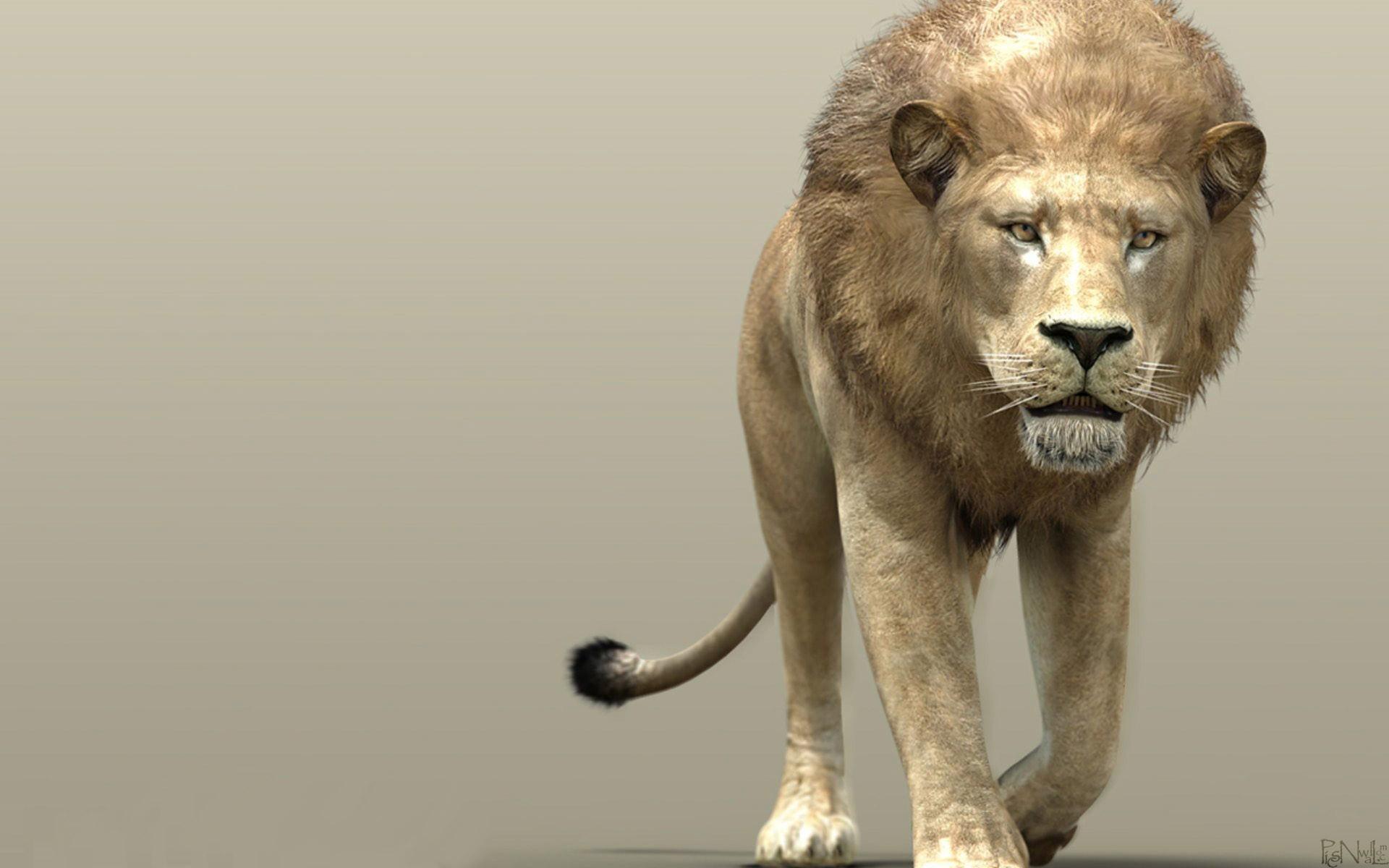 3D Lion Wallpapers Screensavers