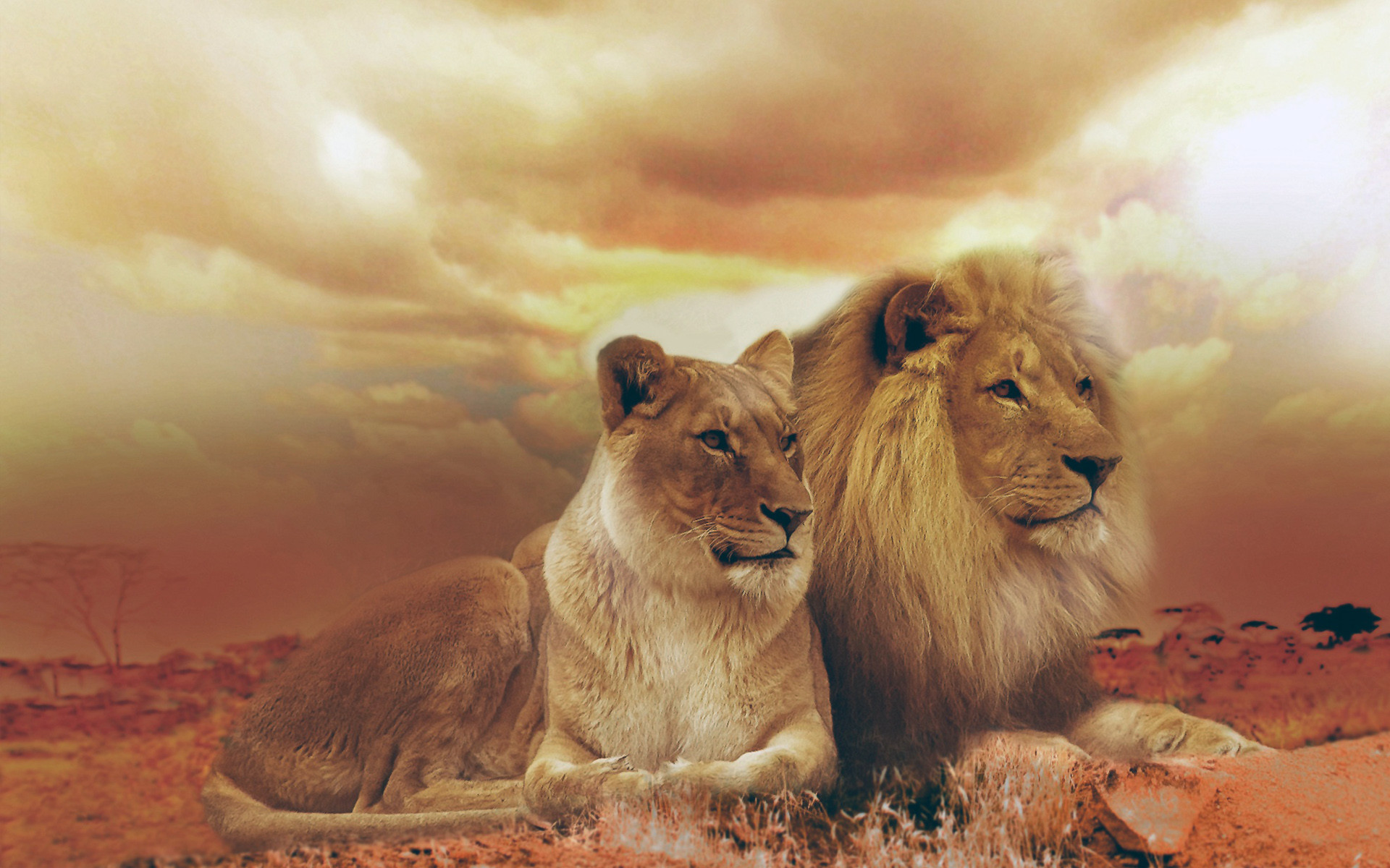 Powerful Lion Wallpapers for Your Desktop