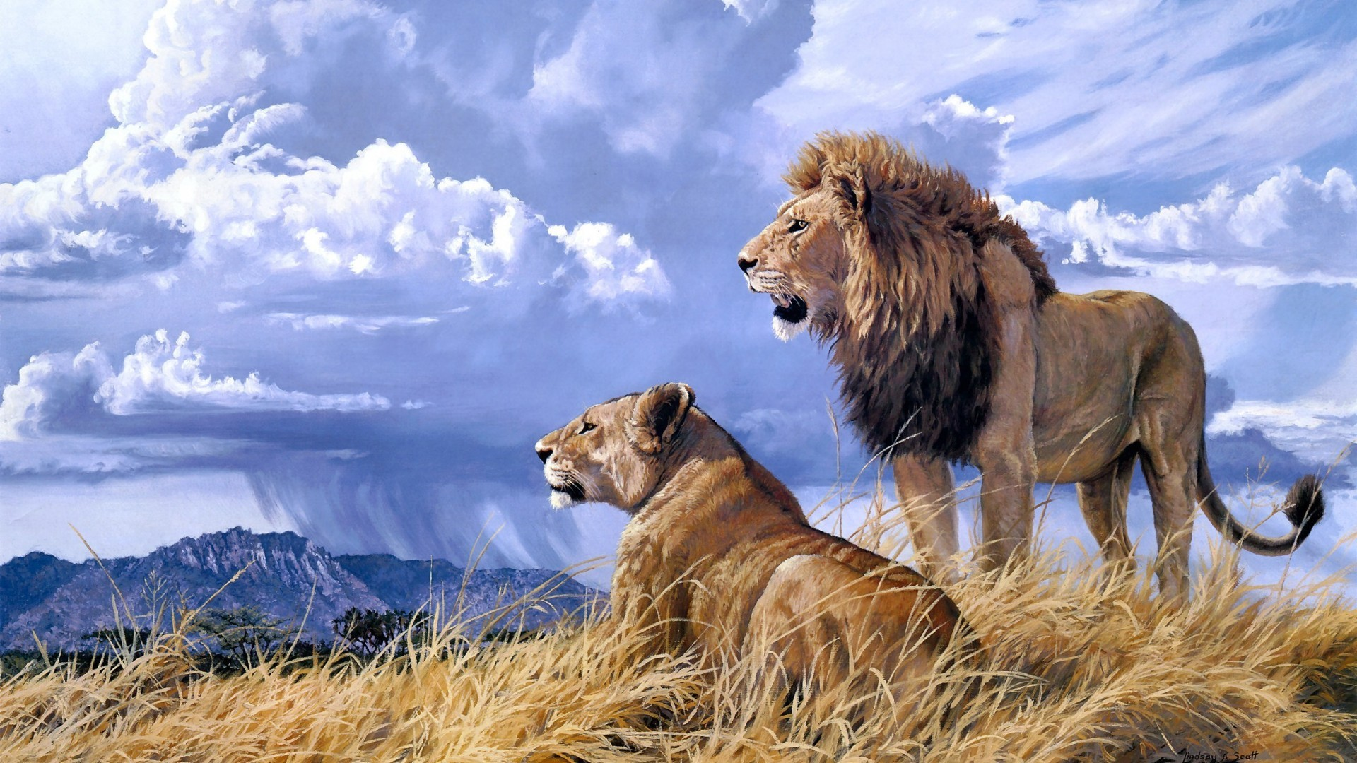 Lion HD Wallpapers Full High Quality New Backgrounds