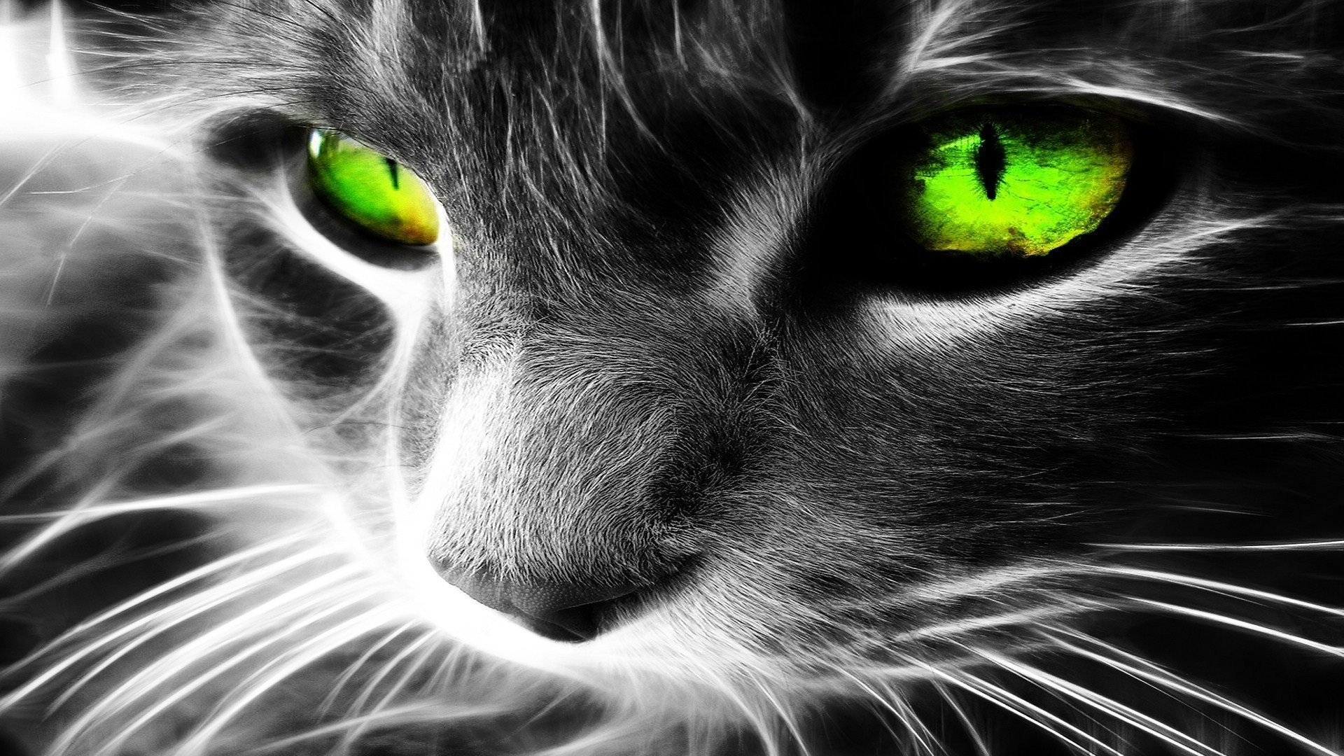 Cat with green eyes wallpaper HQ WALLPAPER – (#37274)