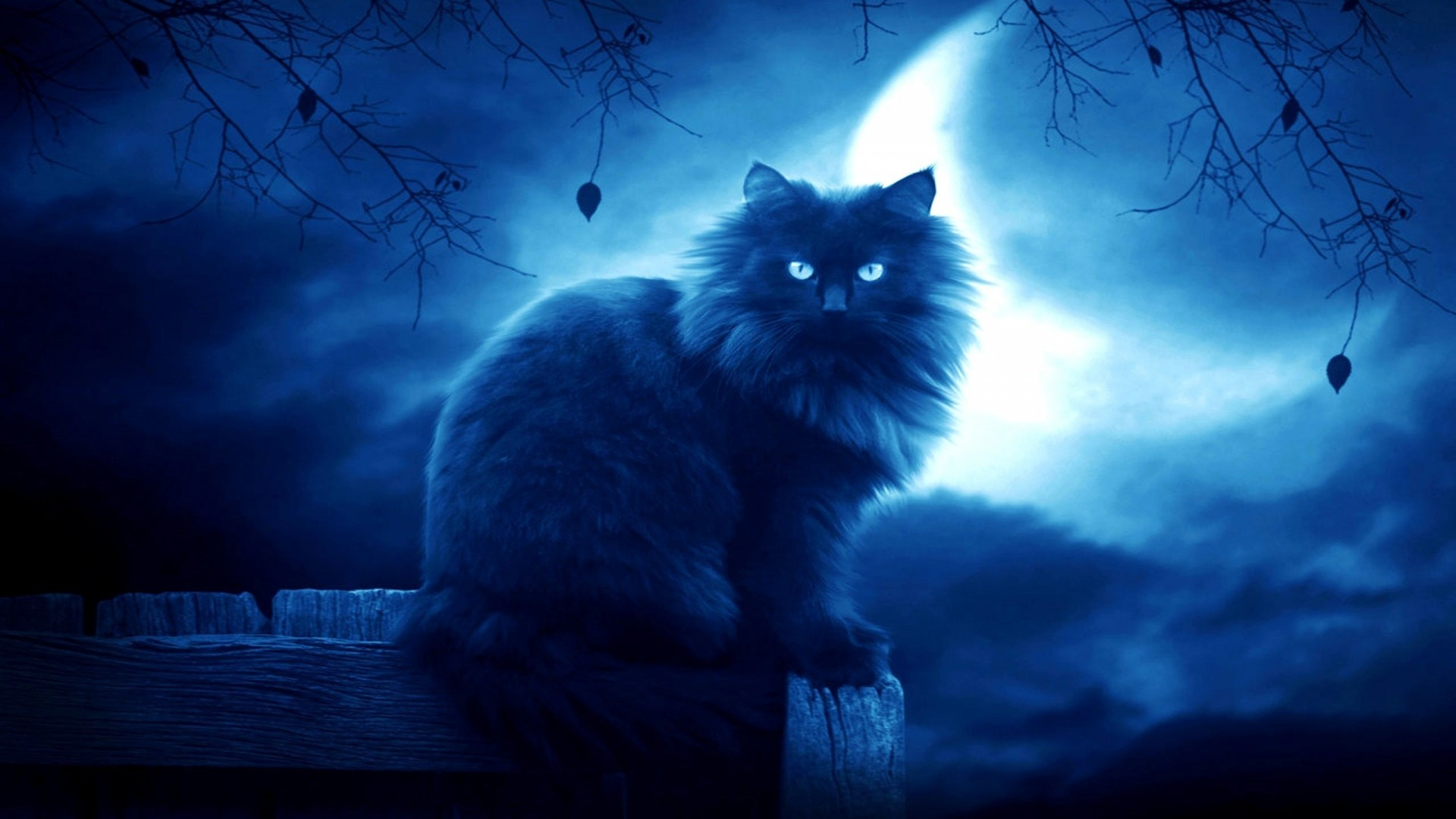 Wallpaper cat, black, moon, night, silhouette, outlines