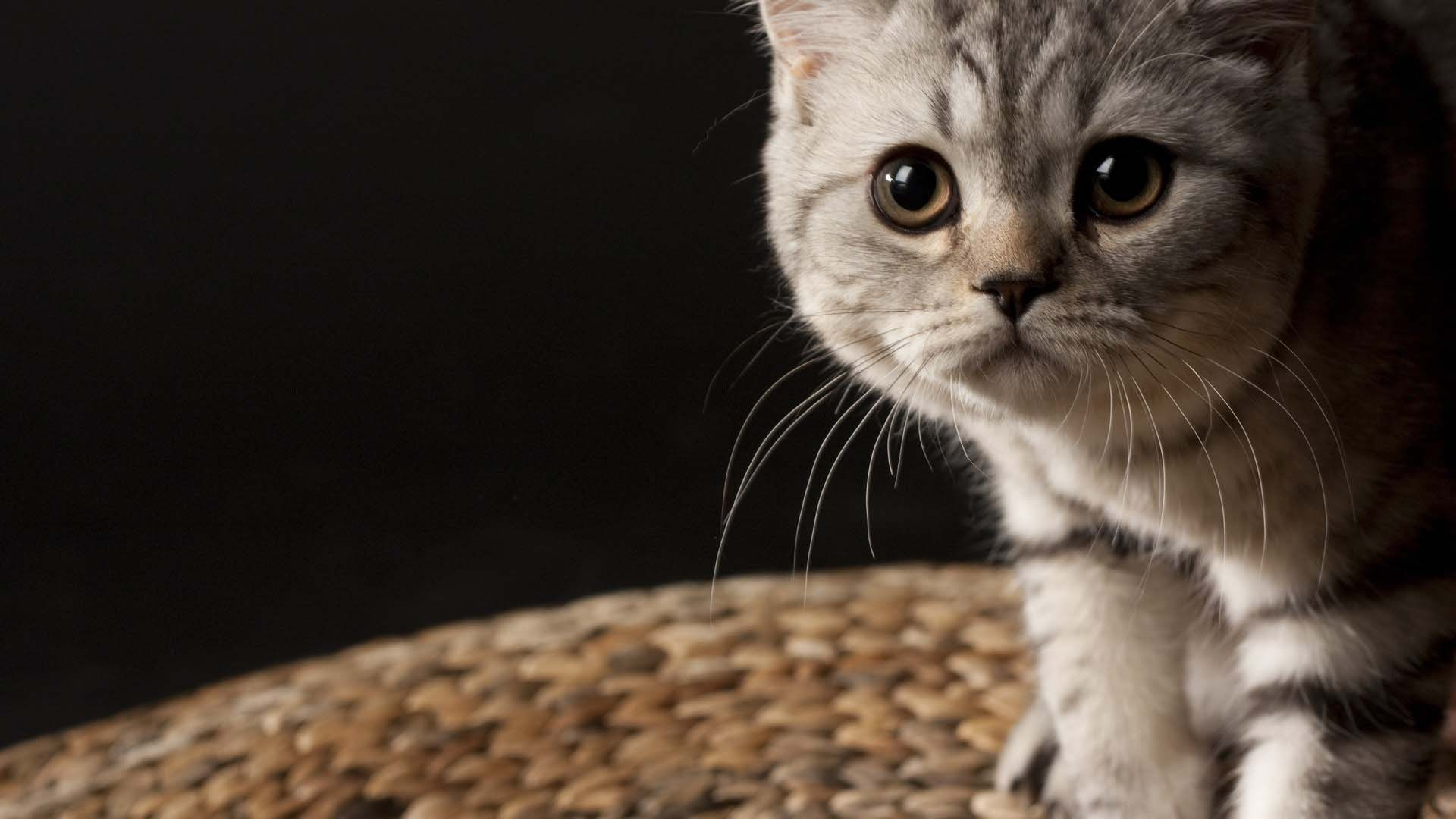 Very Nice Little Fantastic Cat 4k Wallpaper