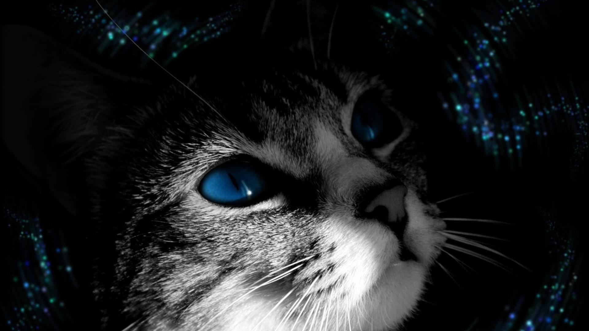 Wallpaper cat, muzzle, black white, blue-eyed