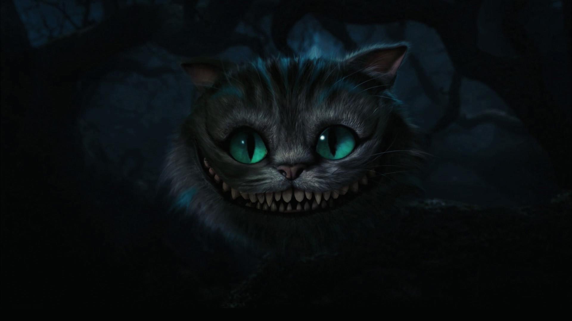 Cat Wallpaper 5