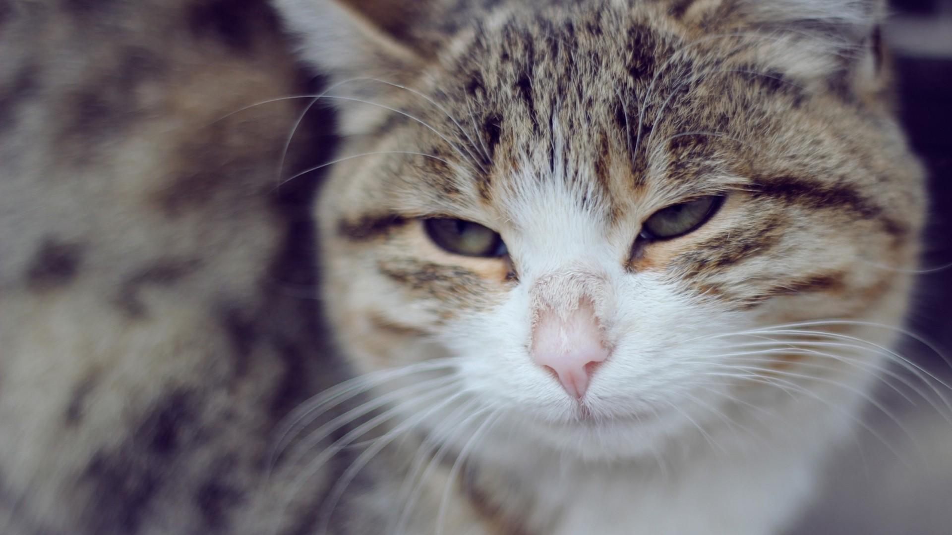 Wallpaper cat, sad, face, squint