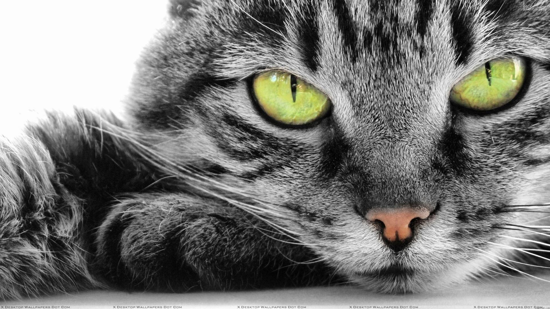 Cat Close Up Wallpaper