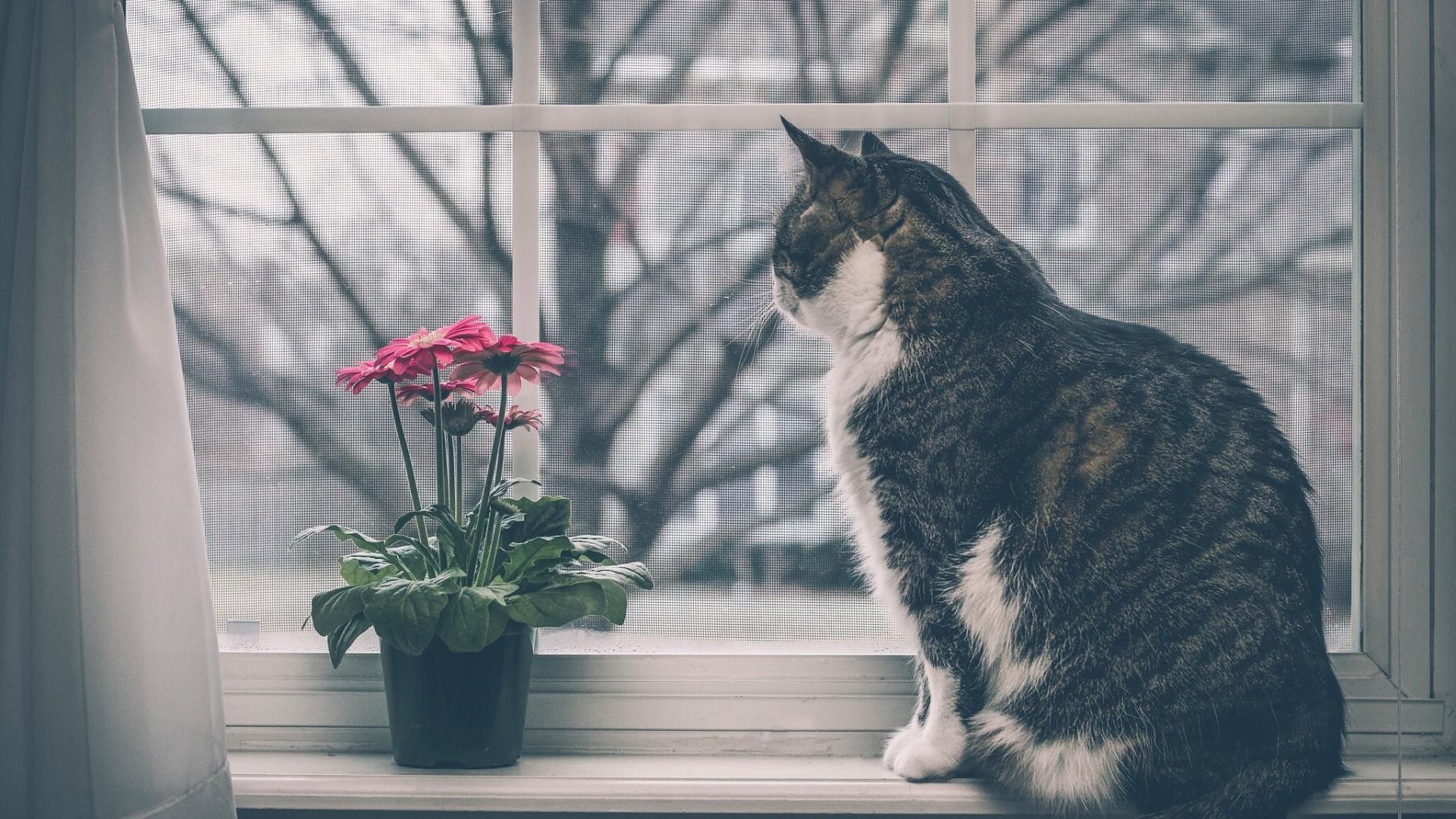 Wallpaper cat, windowsill, flowers, window