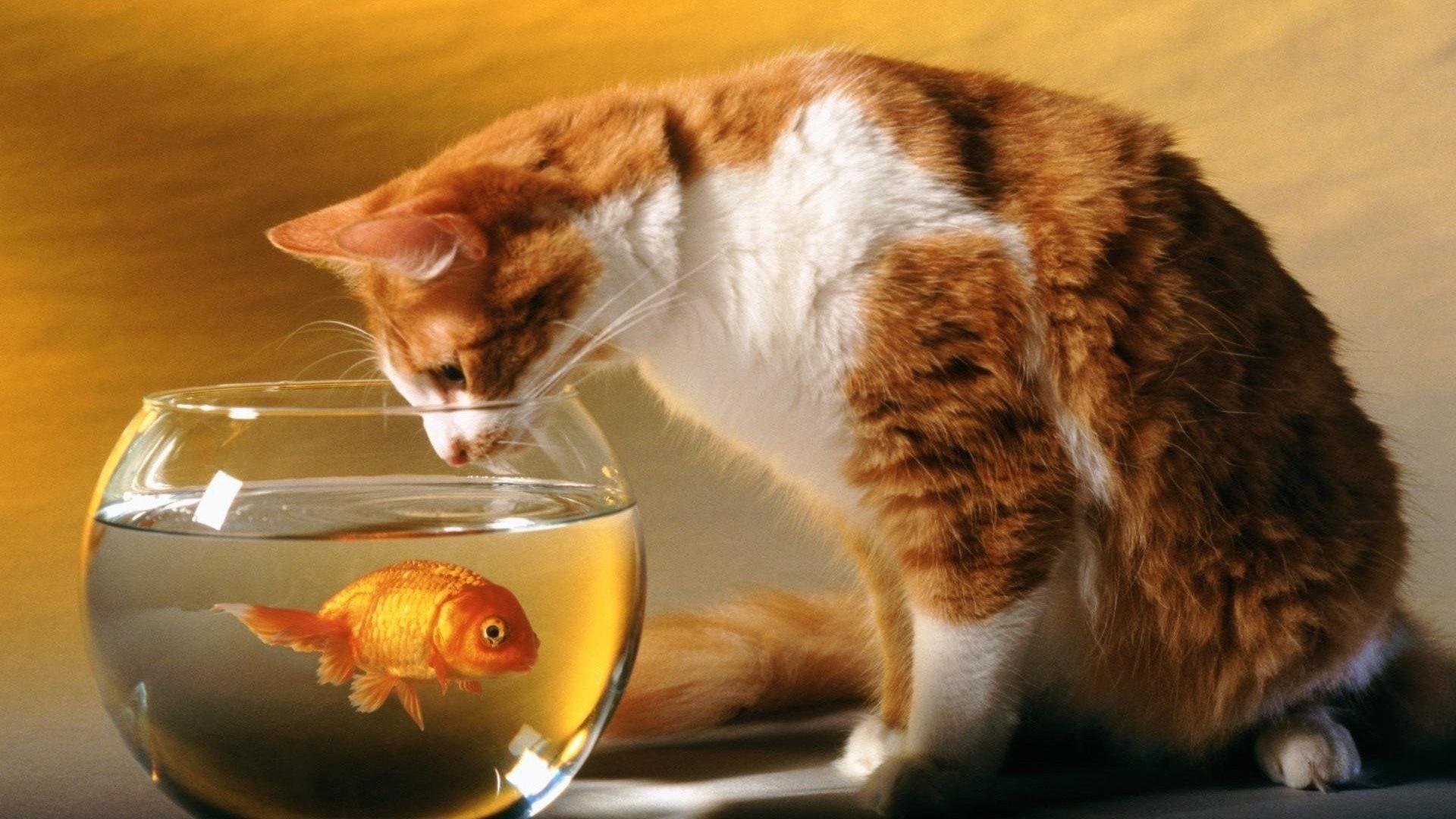 Animalli.com – Cats Cat Wallpapers 1920×1080