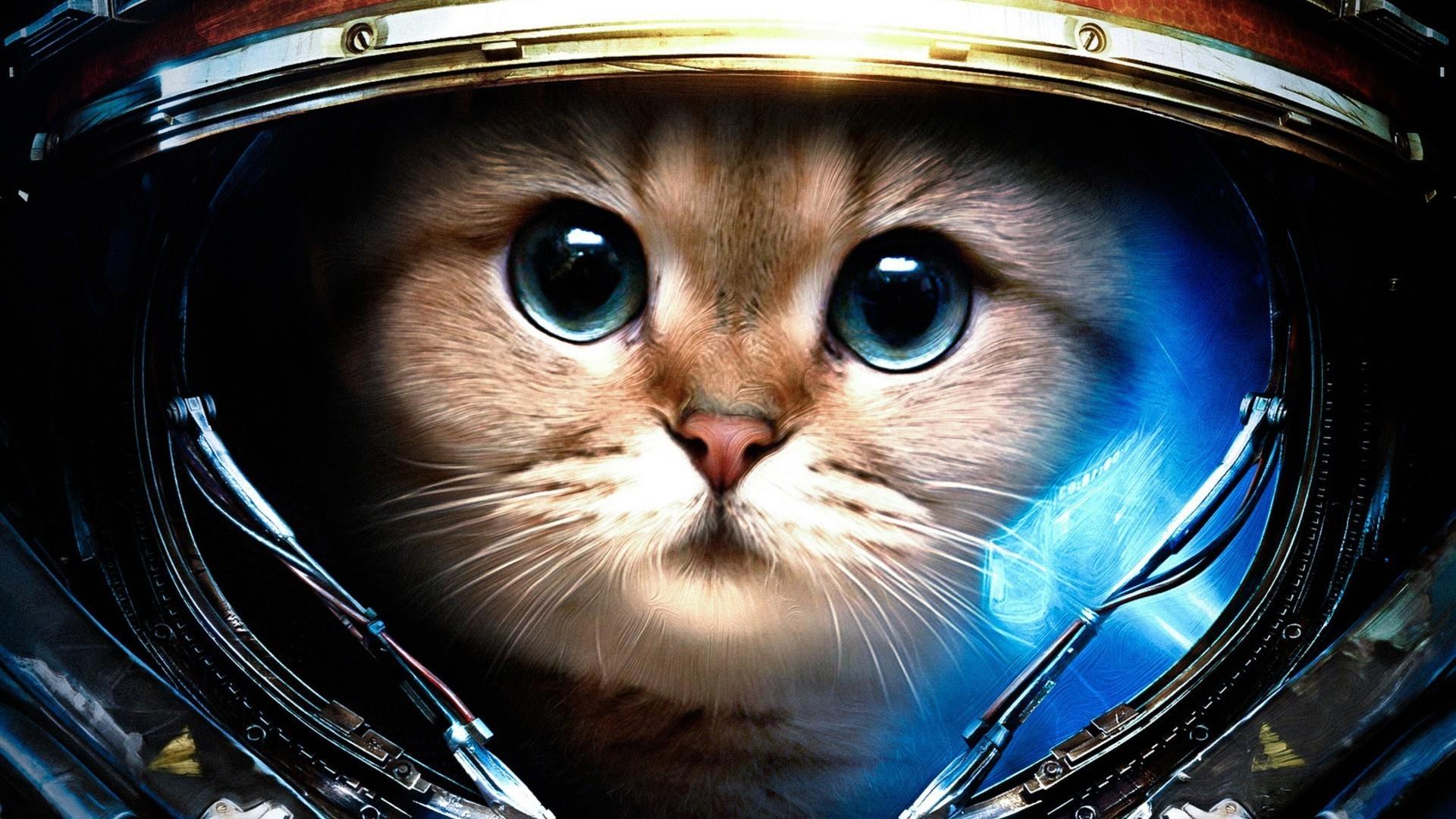 Cat in StarCraft suit HD Wallpaper 1920×1080