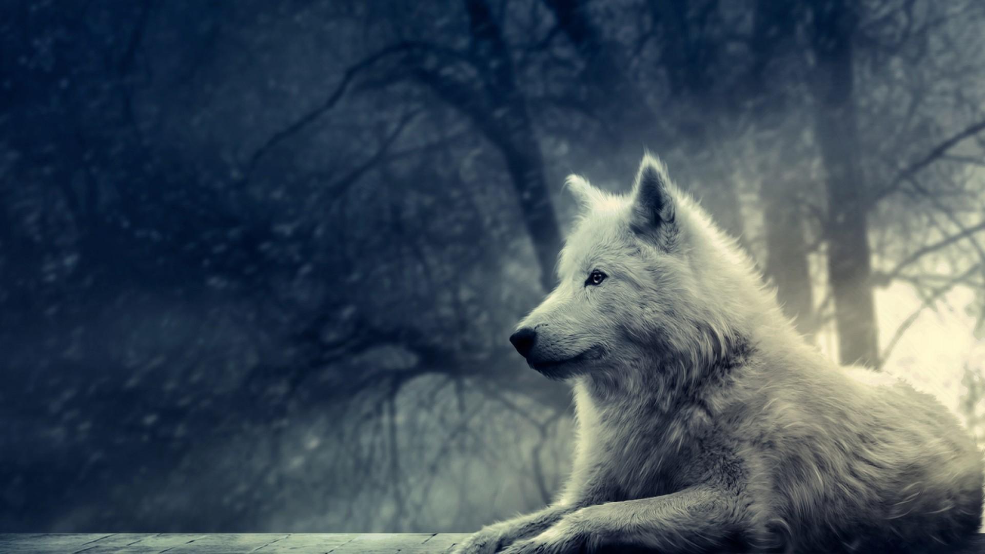 cartoon wolf images wallpaper