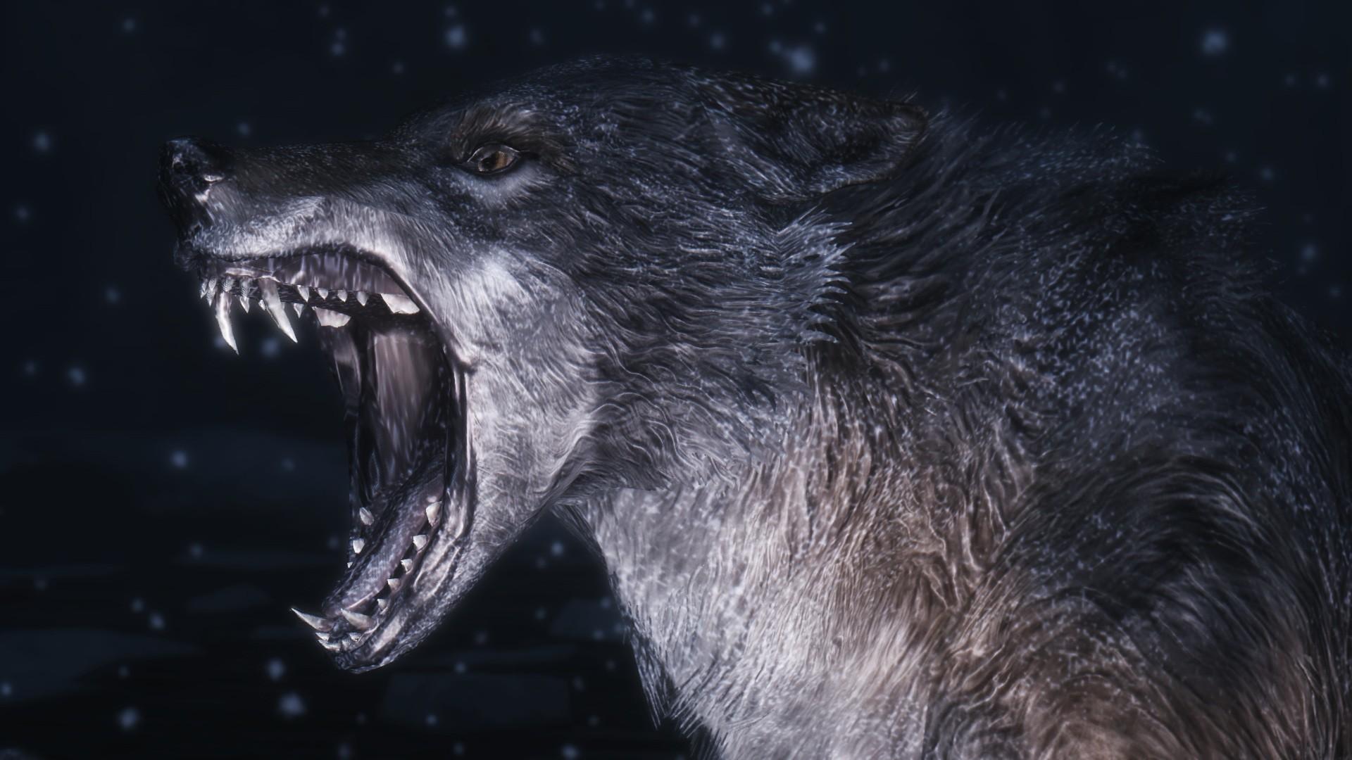 Wolf Computer Wallpapers, Desktop Backgrounds | | ID:309182
