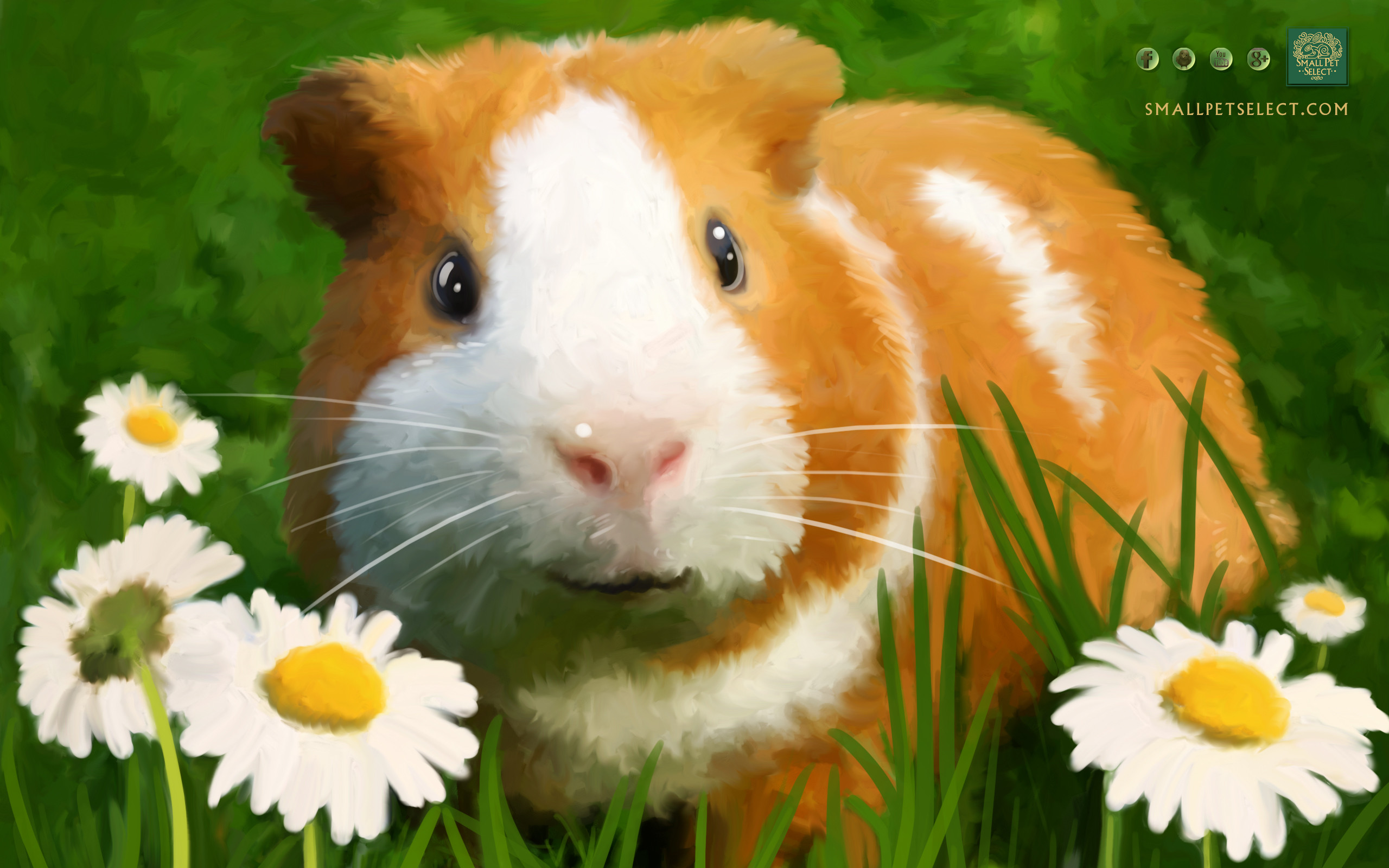 Guinea Pig Wallpaper – Screensaver for your PC, MAC, Ipad & cell phone