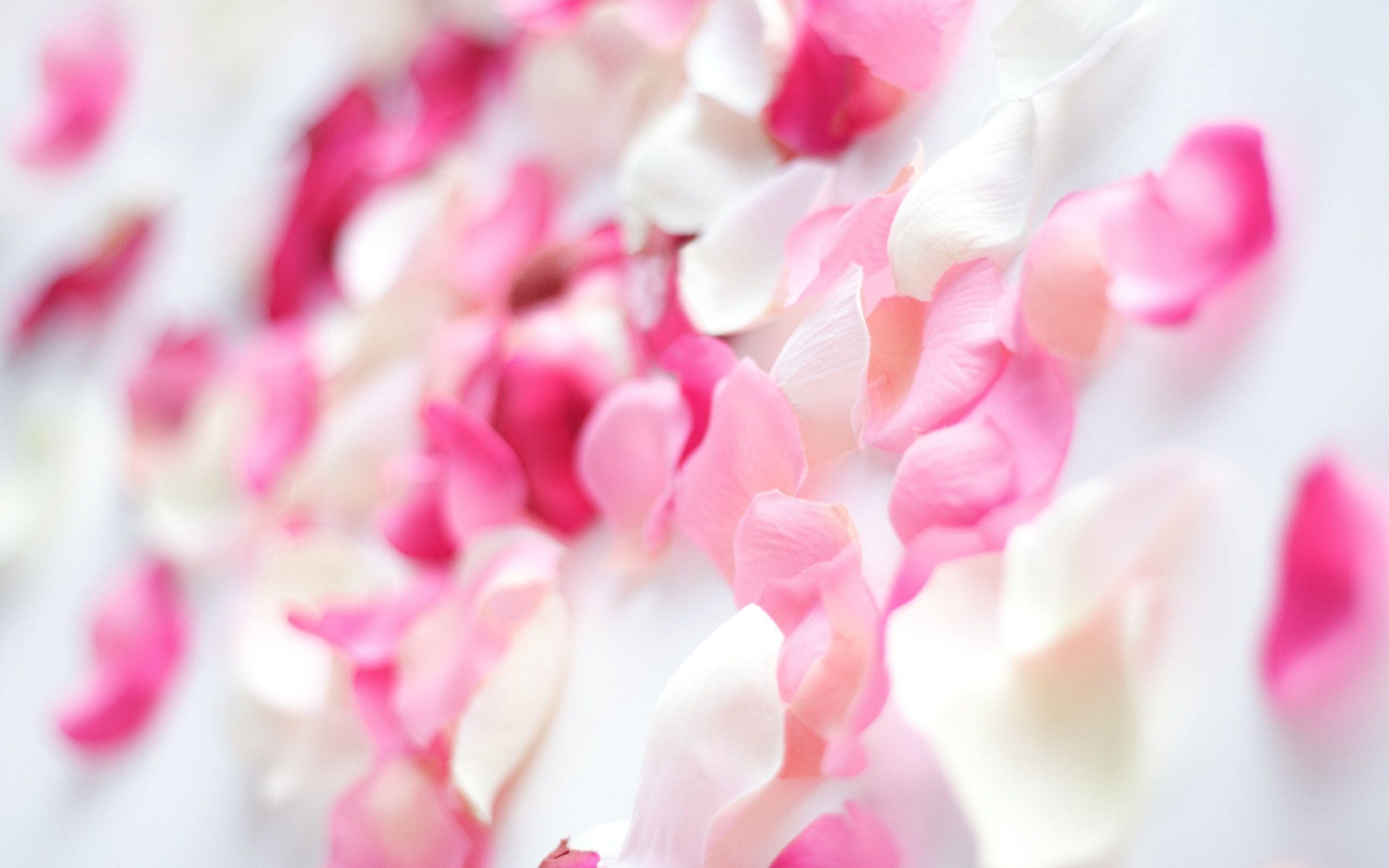 Wallpapers Tagged With PINK   PINK HD Wallpapers   Page 1