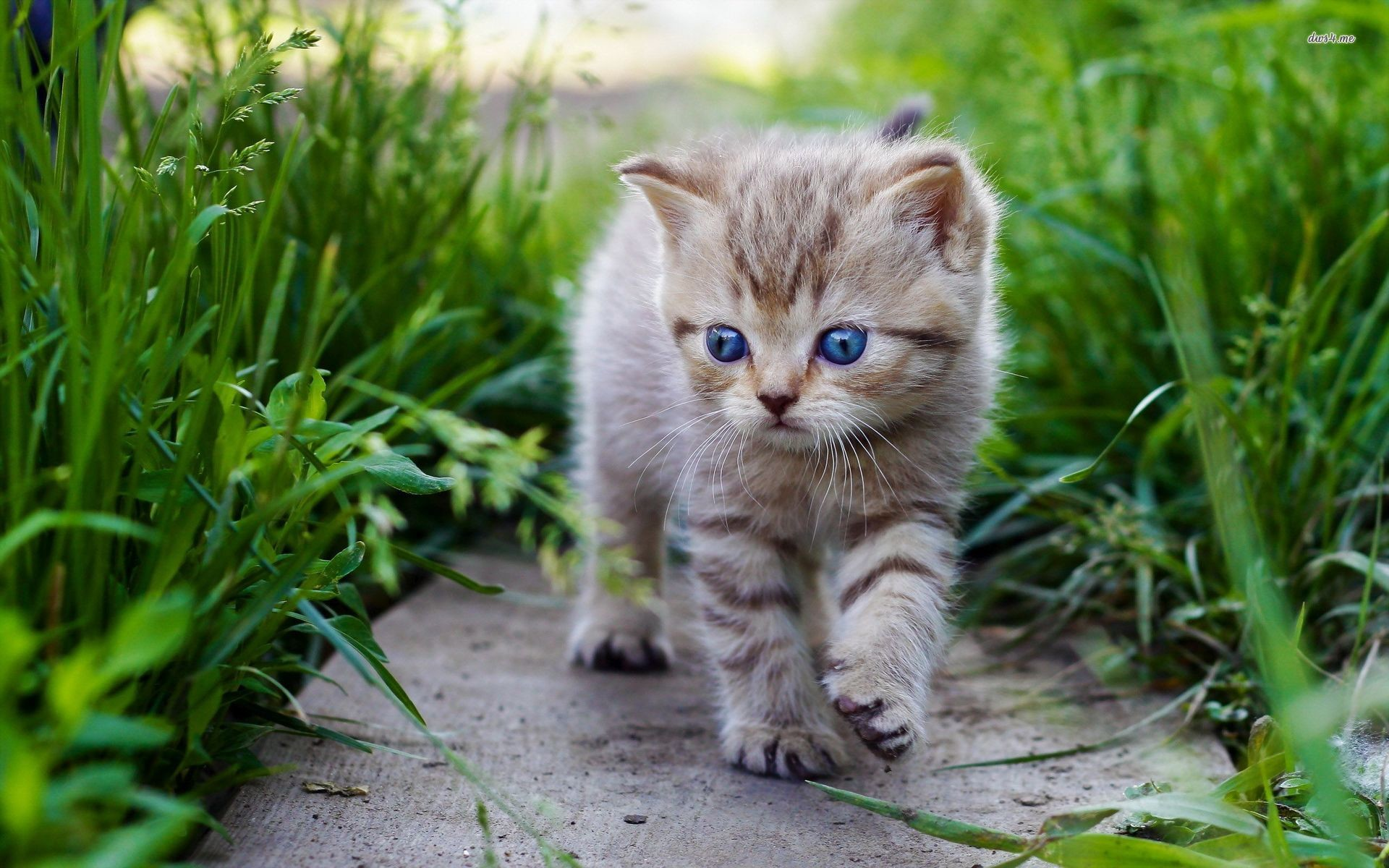 Cute Baby Cats