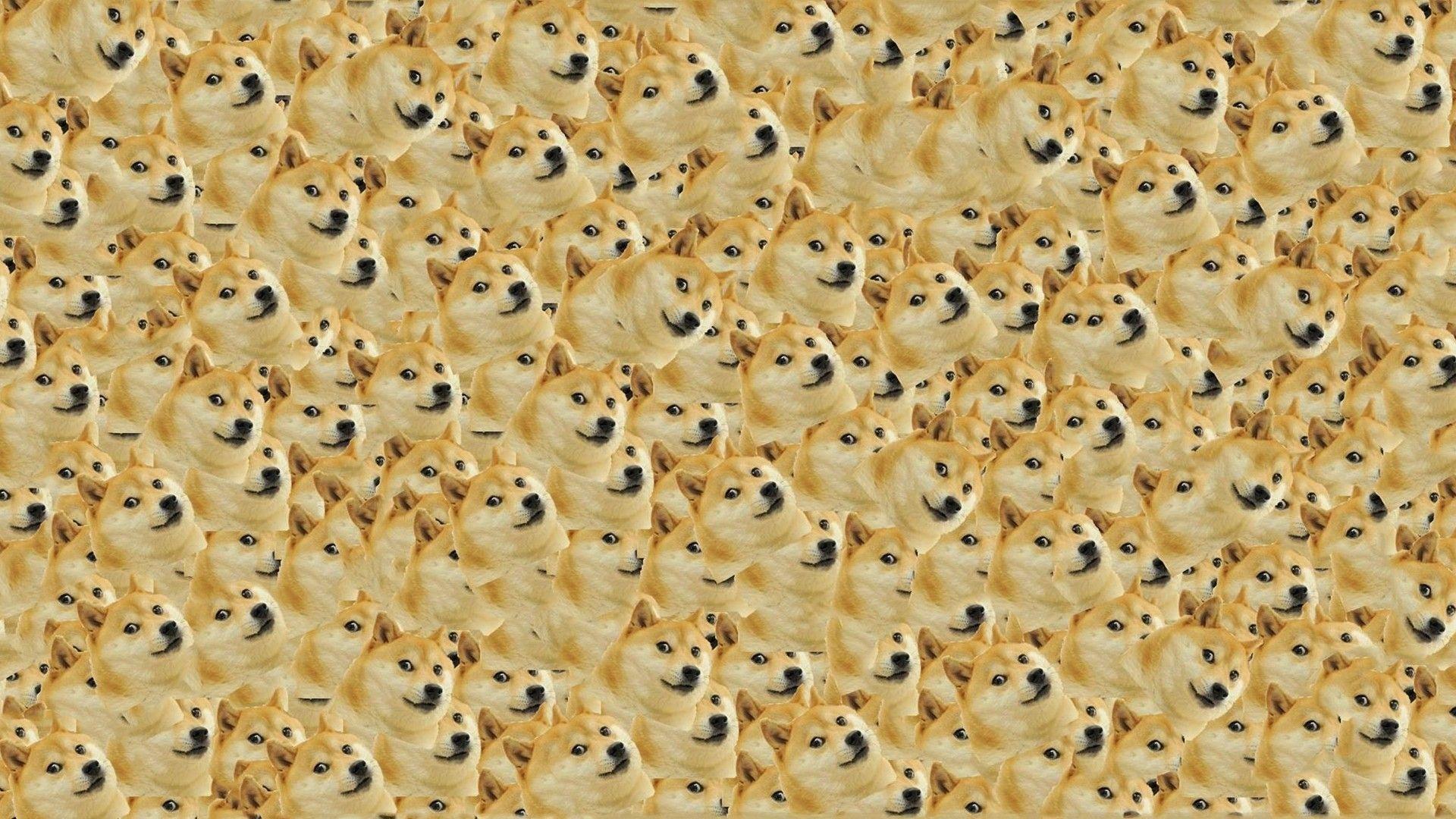 Doge in SPACE – Doge Wallpaper (1920×1080) (14011)