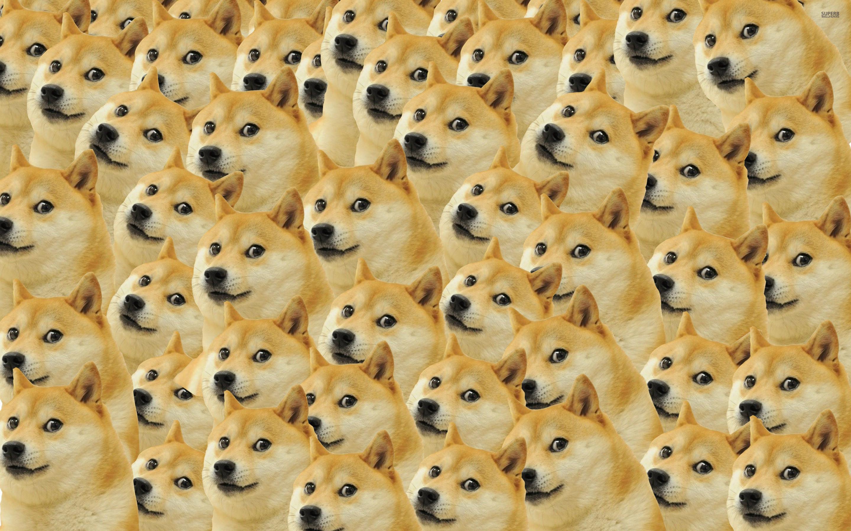 Doge Wallpaper (9 Wallpapers)
